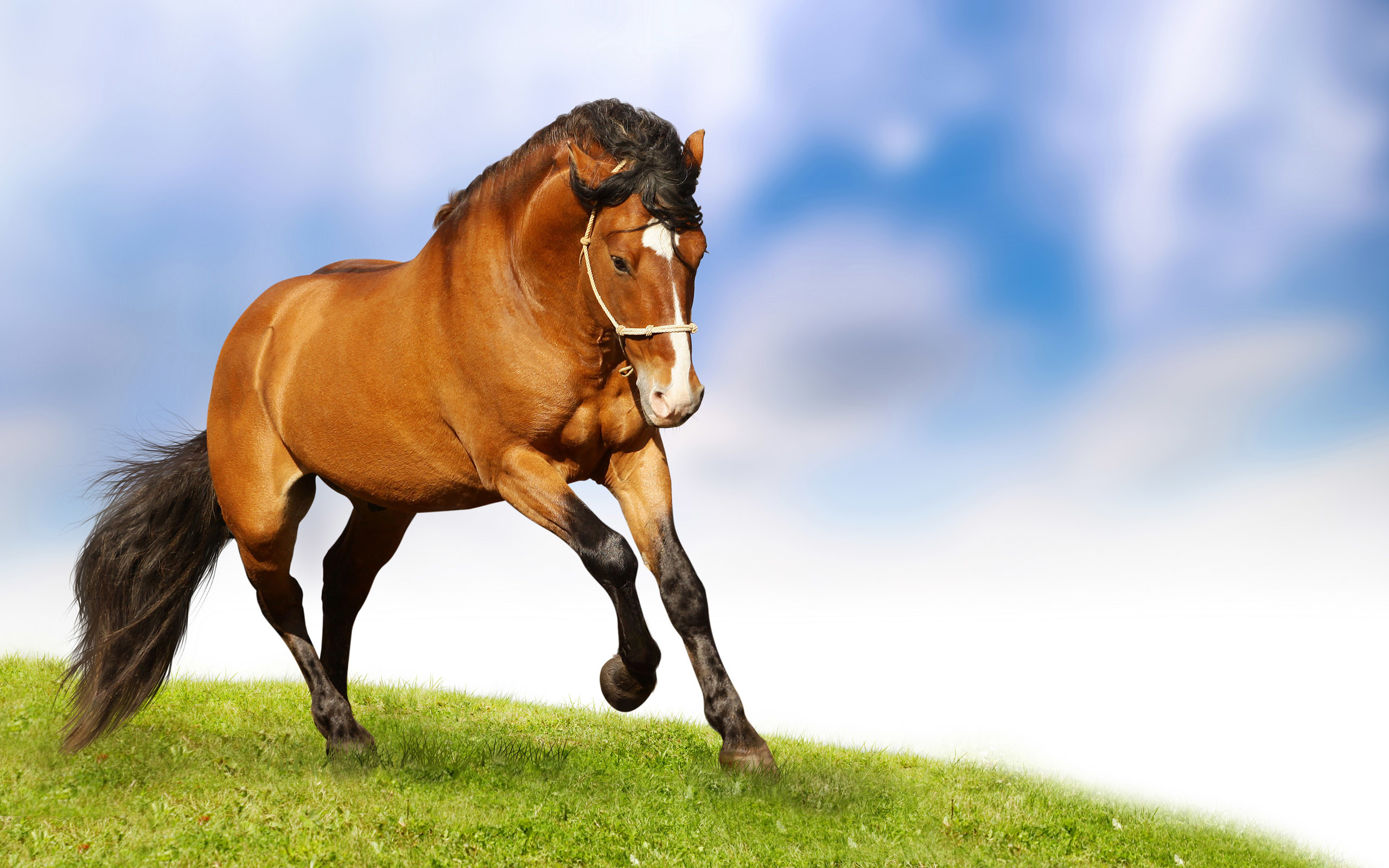 2560x1600 Wallpapers Wild Animals Horse On Grassland Scenery Horses