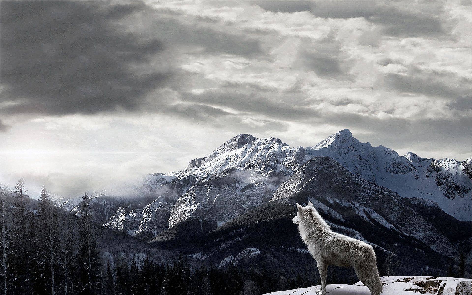 1920x1200 Mountains Gray Wolf - Wallpapers AM