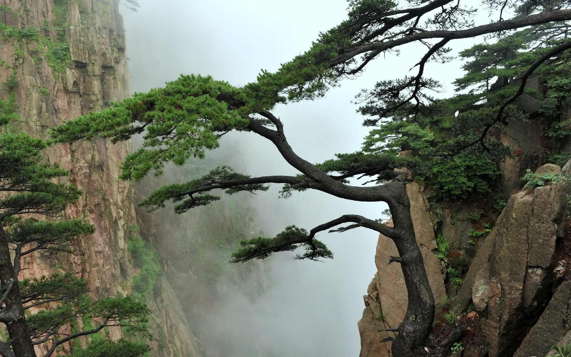 1920x1200 Nature landscapes mountains trees fog mist asian oriental clouds wallpaper  |  | 26273 | WallpaperUP