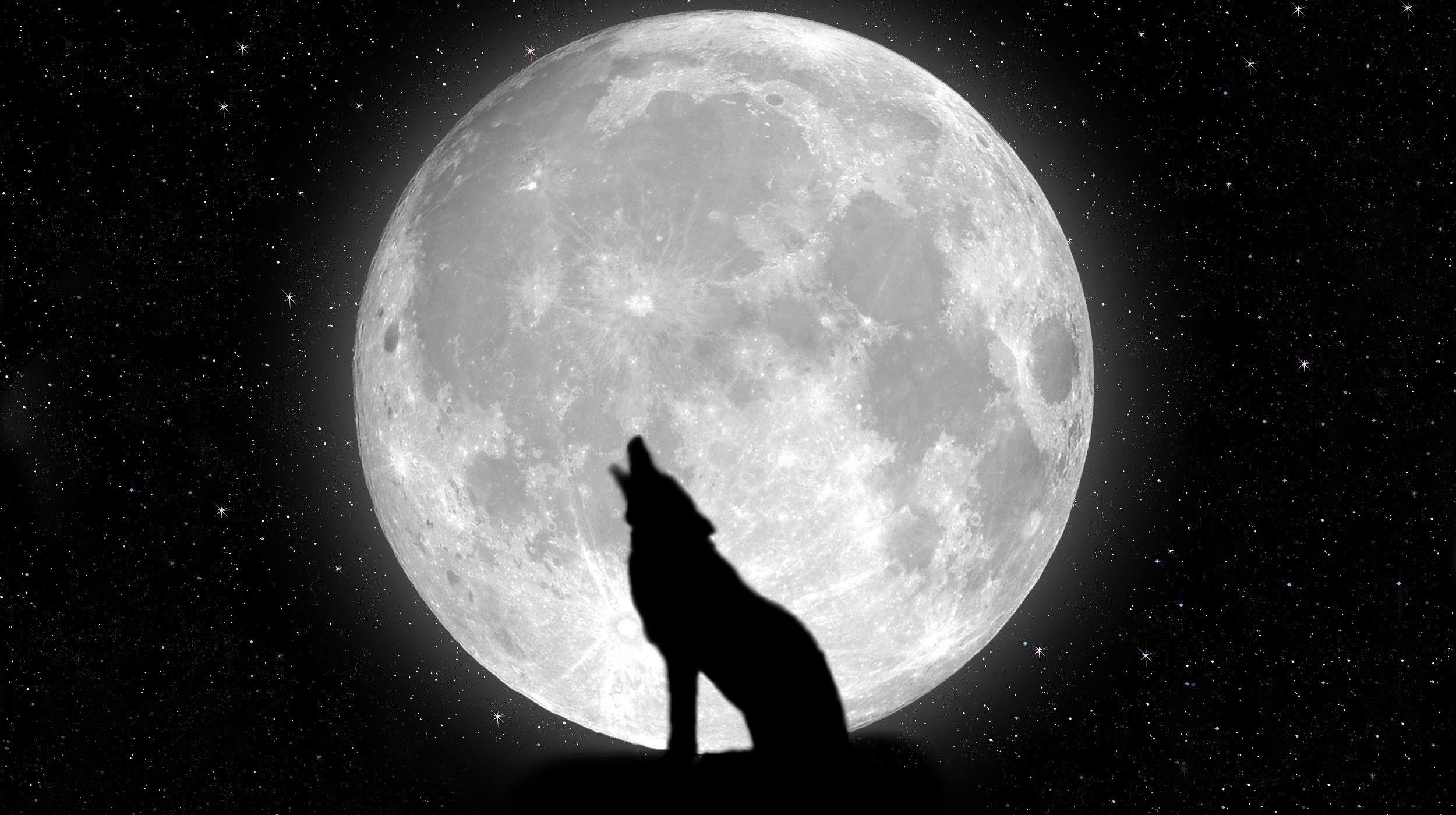 2500x1400 Wallpapers For Black Wolf Hd