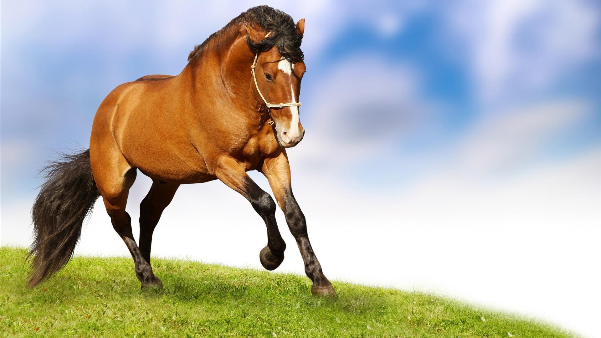 7 Horse Hd Wallpapers 1920x1080 Nosirix