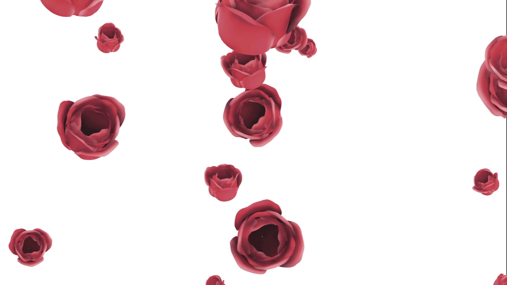 1920x1080 Falling red roses on a white background Motion Background - Storyblocks  Video