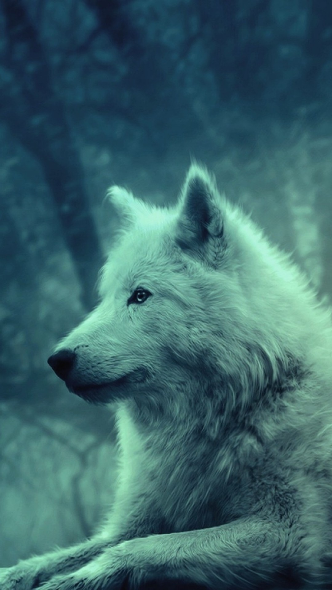 Galaxy Wolf Wallpaper 69 Images