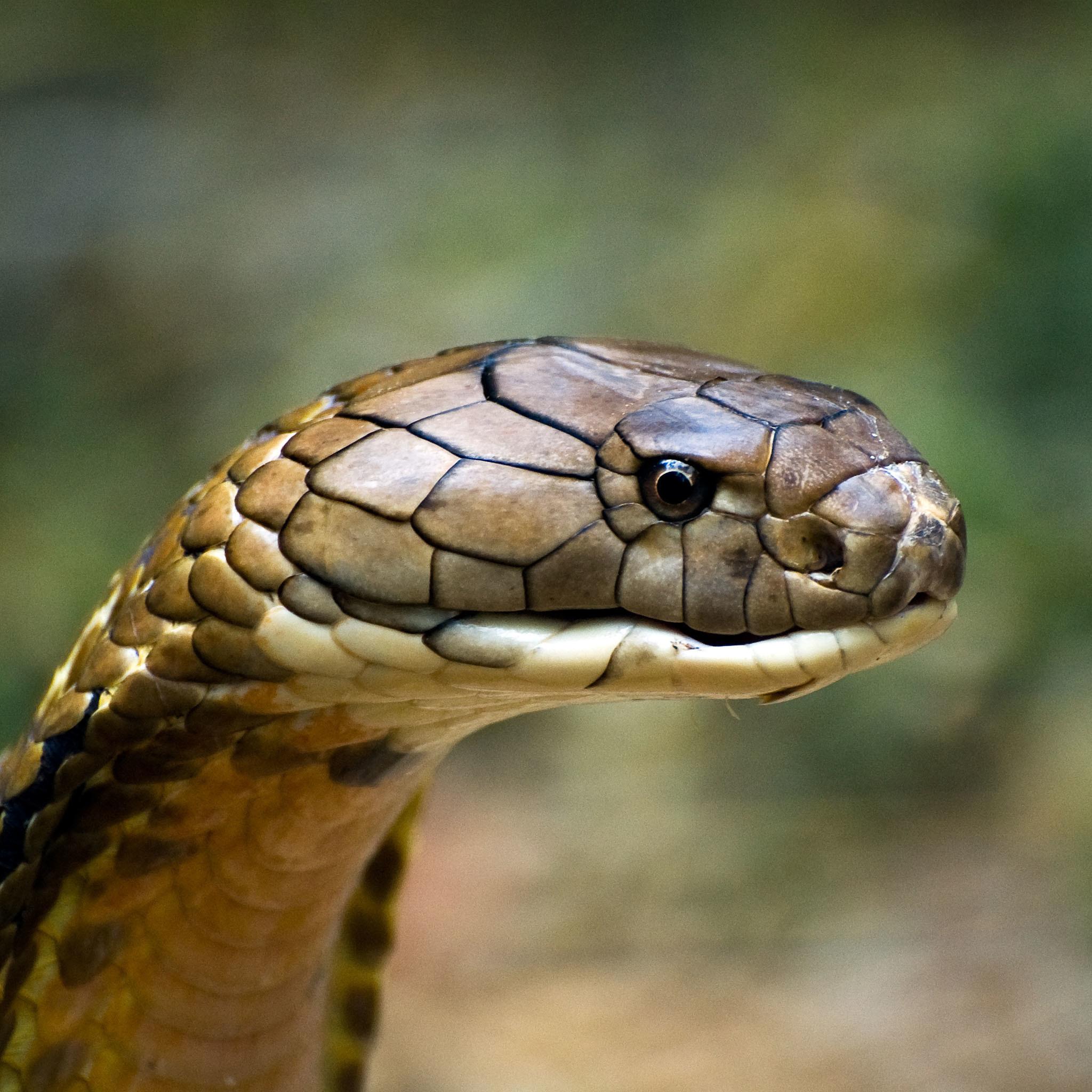 snake - photo #32