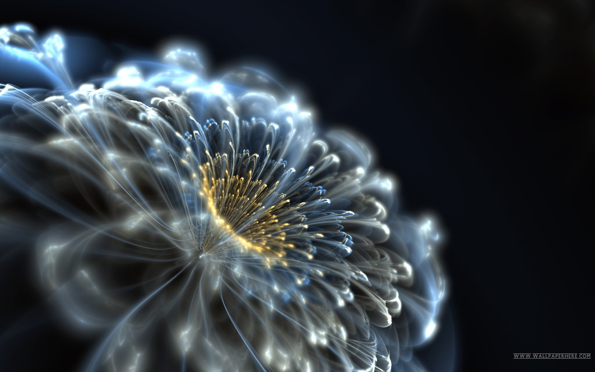 1920x1200 3D Motion Screensavers and Wallpaper | Art Hd Beautiful Flower Wallpaper  Screensavers Animated px
