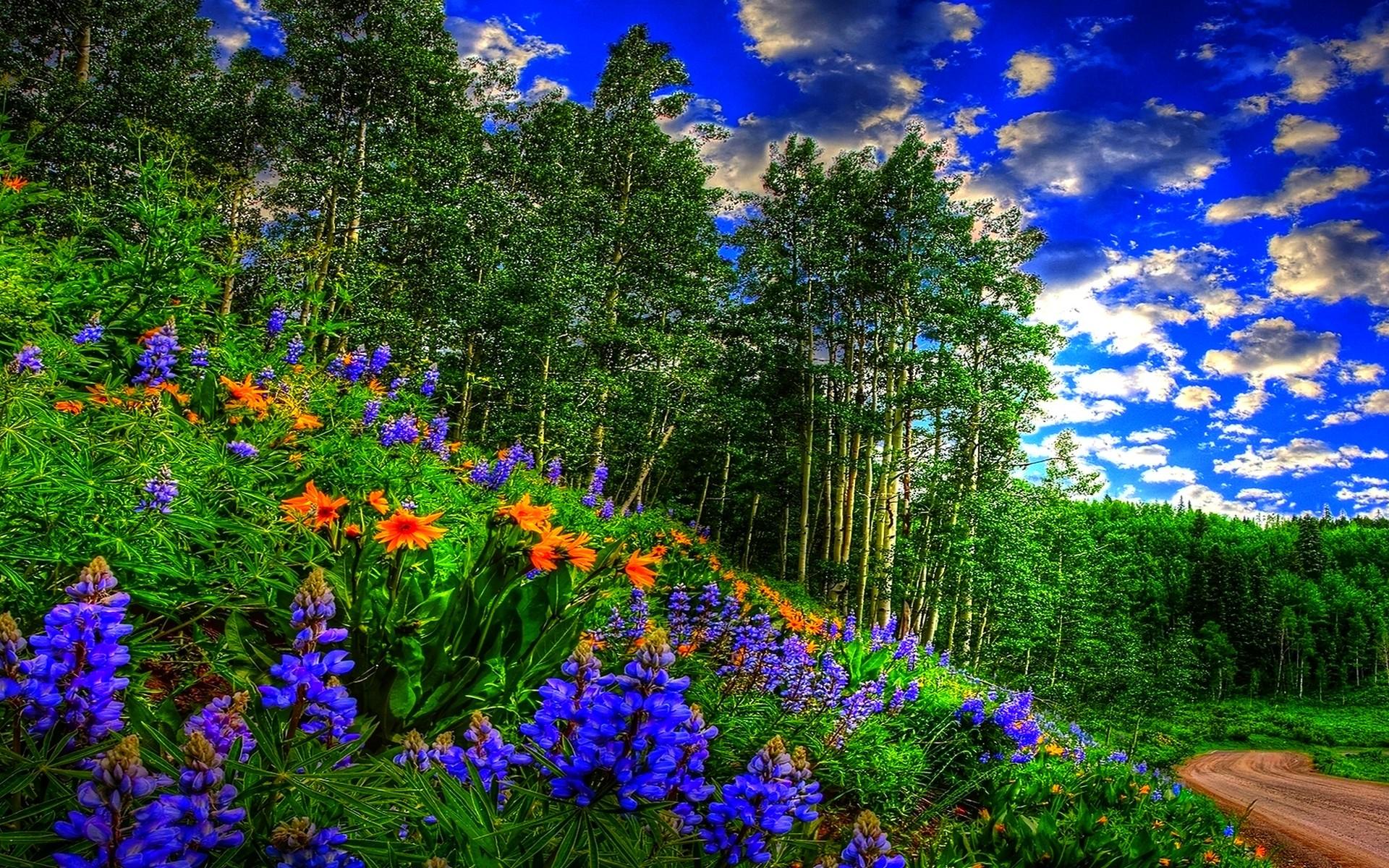 Spring Background Pictures for Desktop (69+ images)