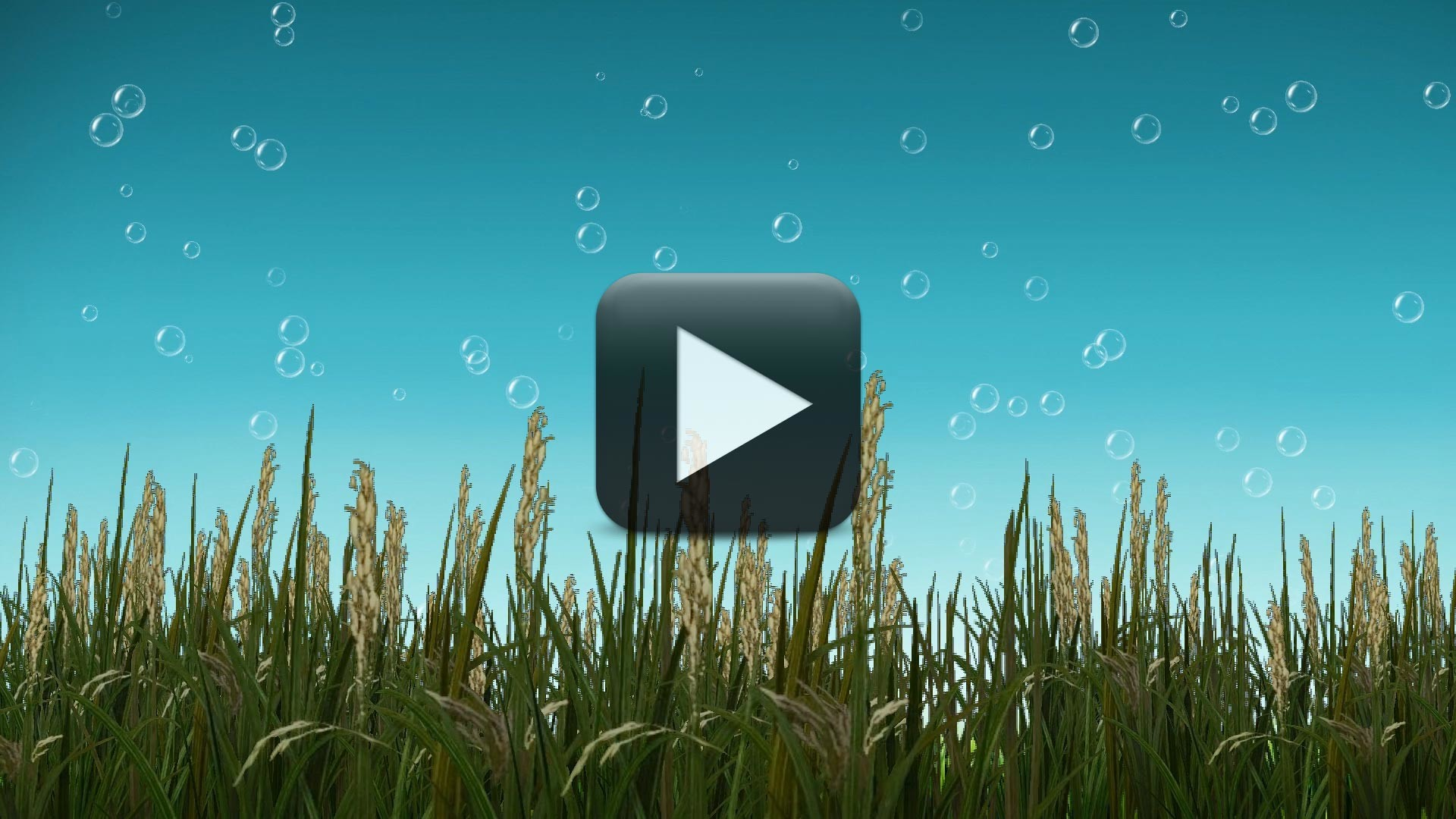 1920x1080 Free Nature BackGround Video with Cool Bubbles Animation | All Design  Creative