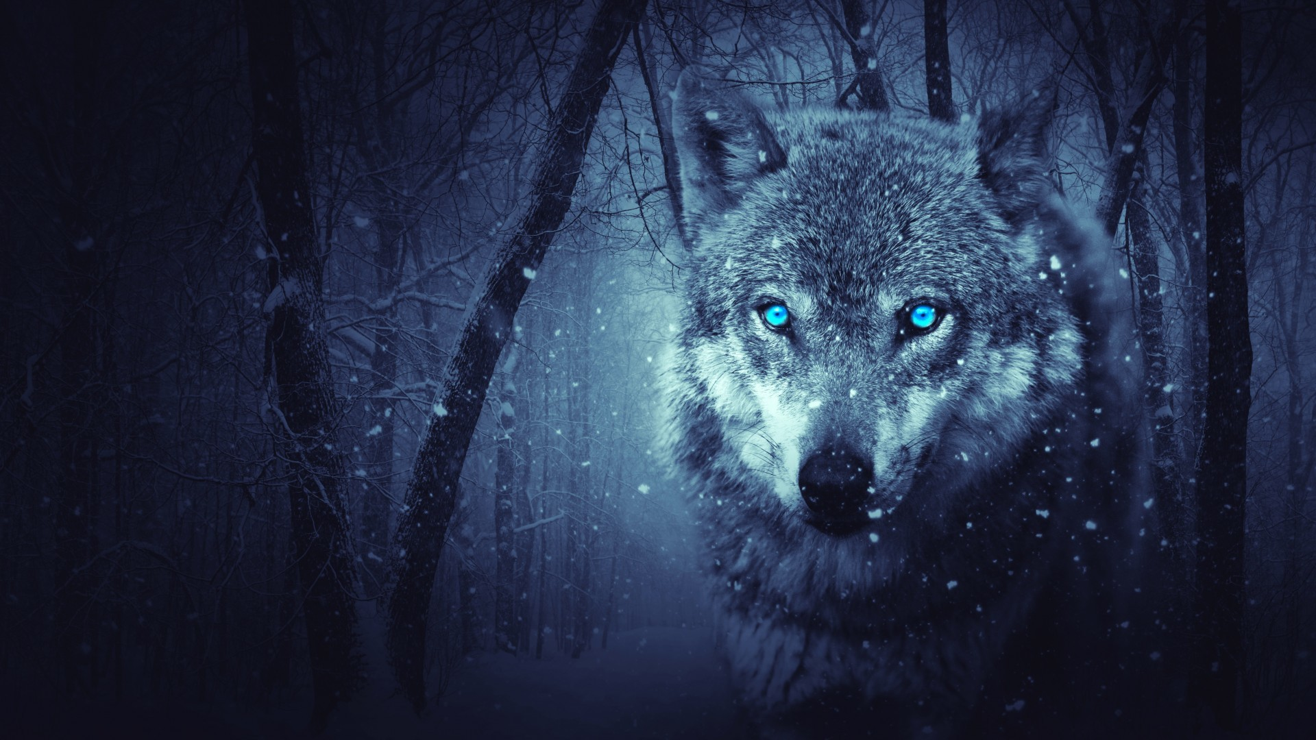 1920x1080 Wold Wolf Blue Eyes Scary Snowfall Winter Hd Wallpaper