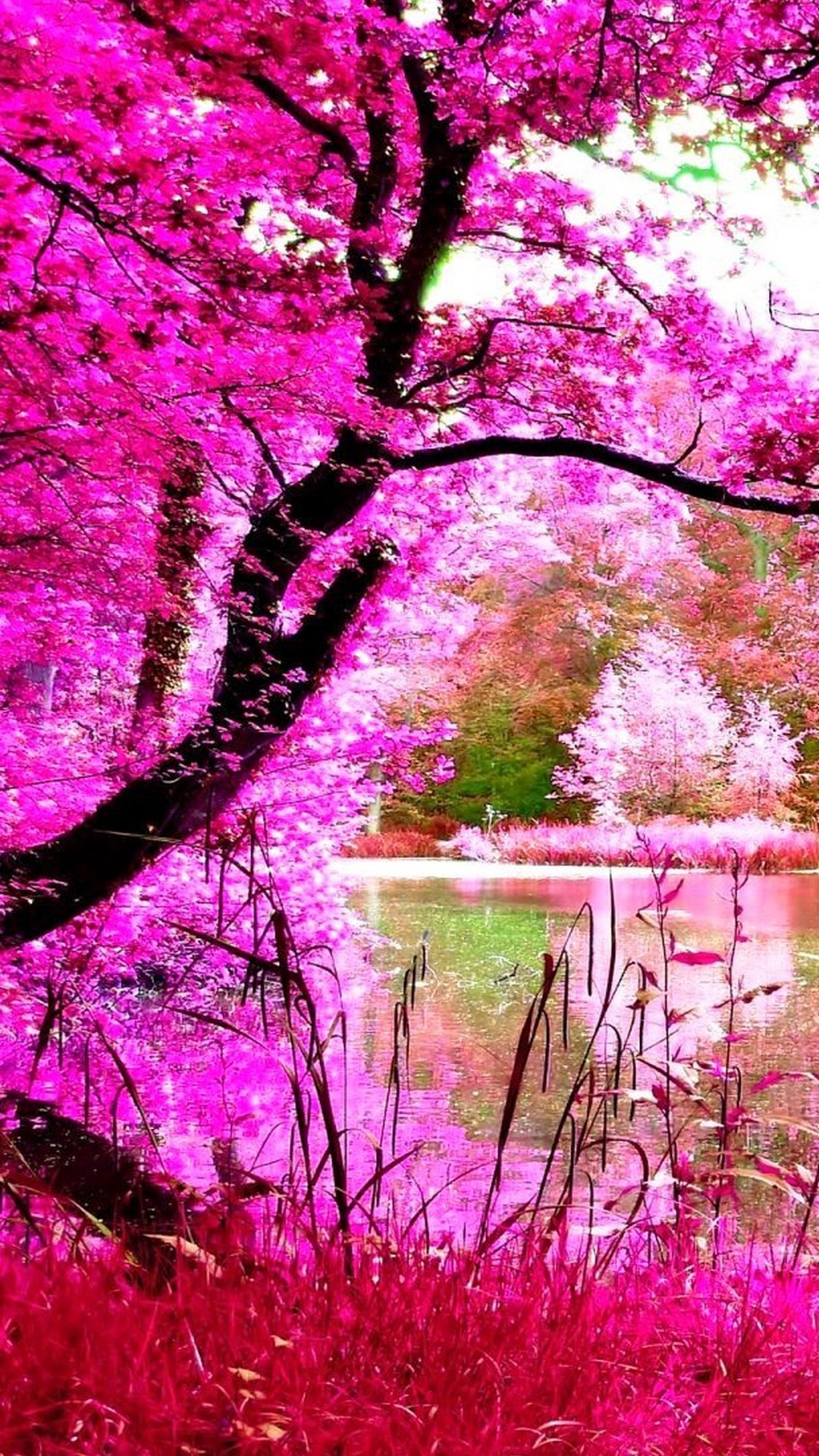 Beautiful Wallpapers Of Nature For Mobile: Pink Nature Wallpaper (53+ Images