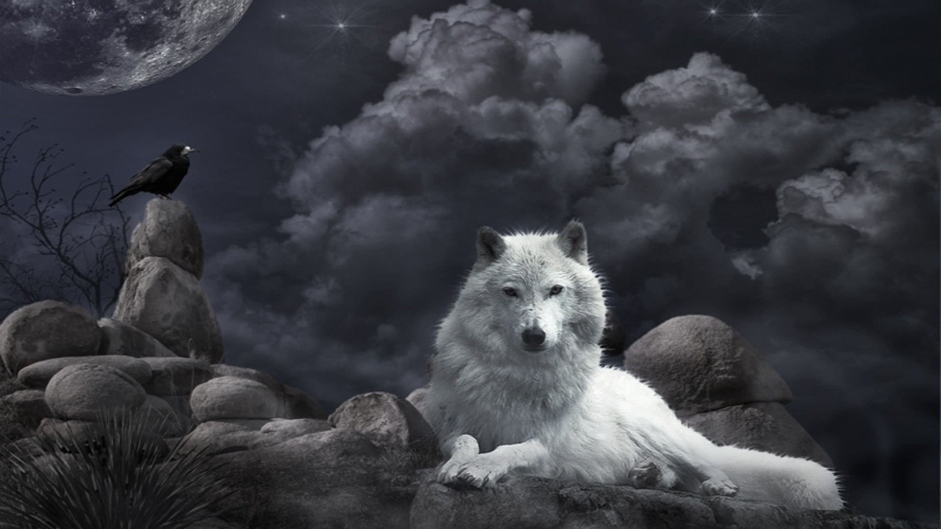 1920x1080 HD Wallpaper | Background ID:125502.  Animal Wolf
