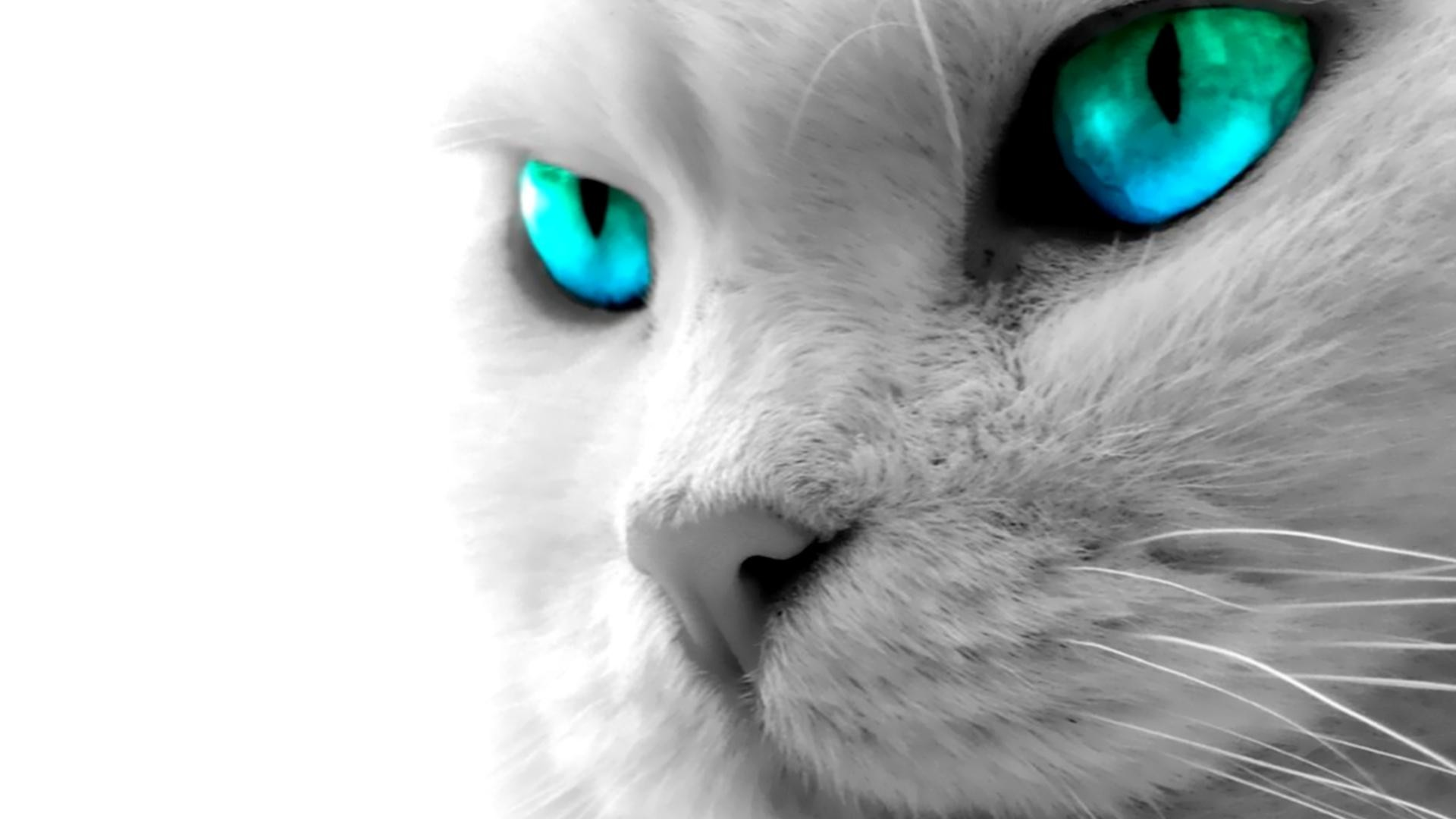 1920x1080 Cat Blue Eyes High Definition Wallpaper  Full HD Wallpapers