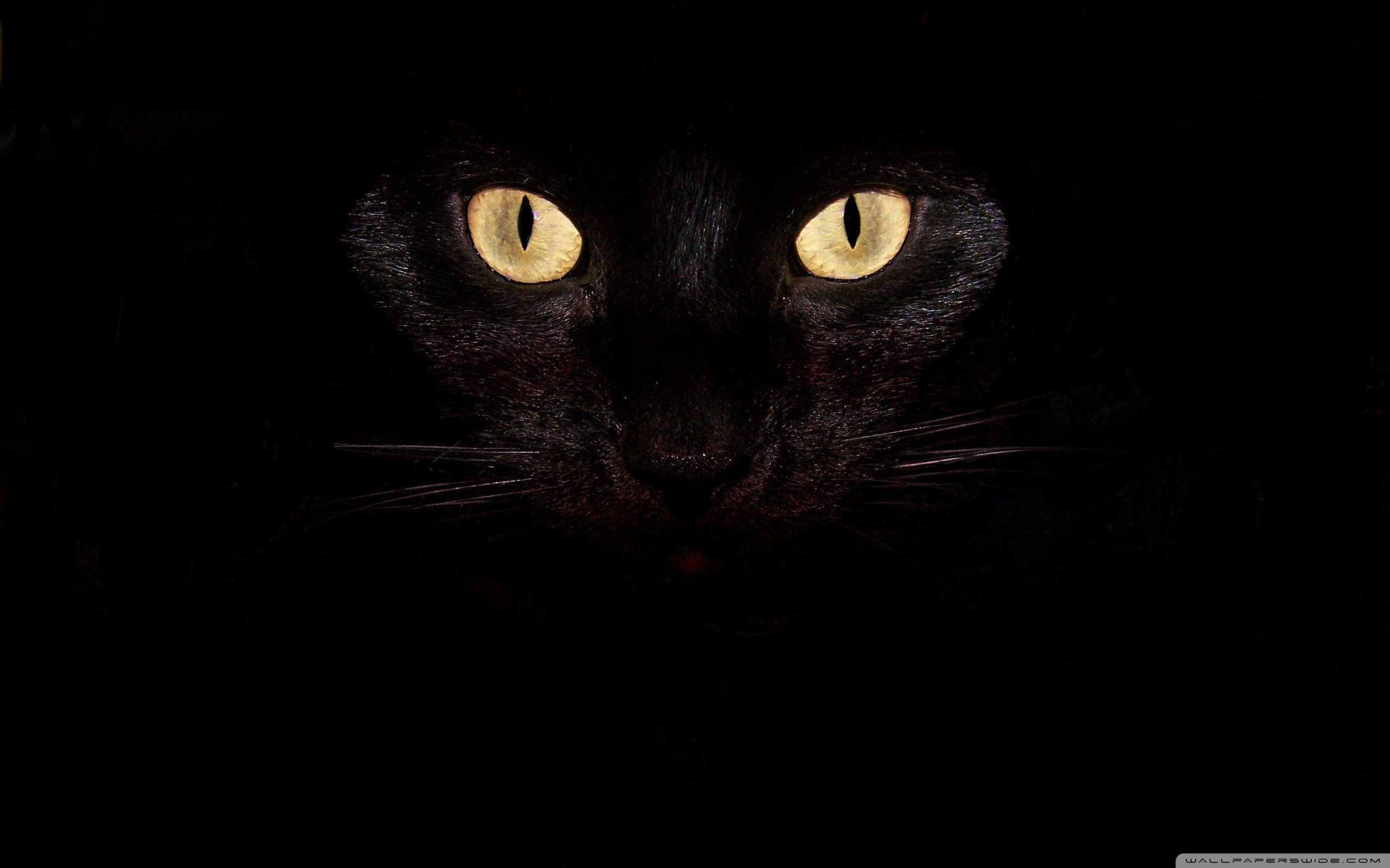 Black Cat Eyes Wallpaper 69 Images