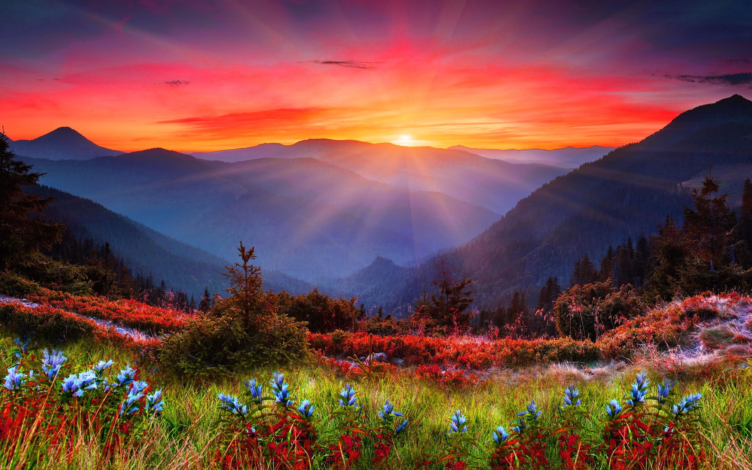 2560x1440 Bear Lake Rocky Mountain National Park Wallpaper