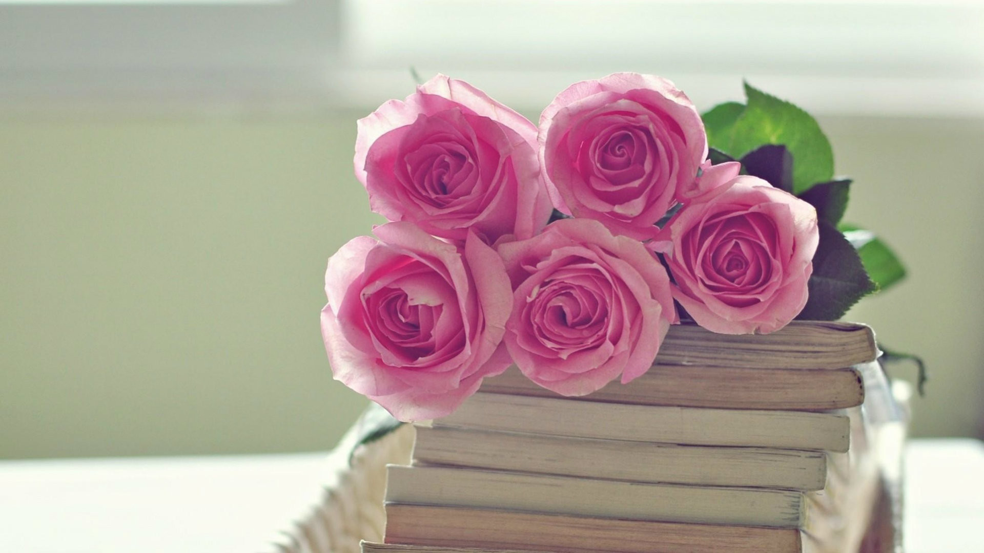 Pink Roses Wallpaper (64+ images)