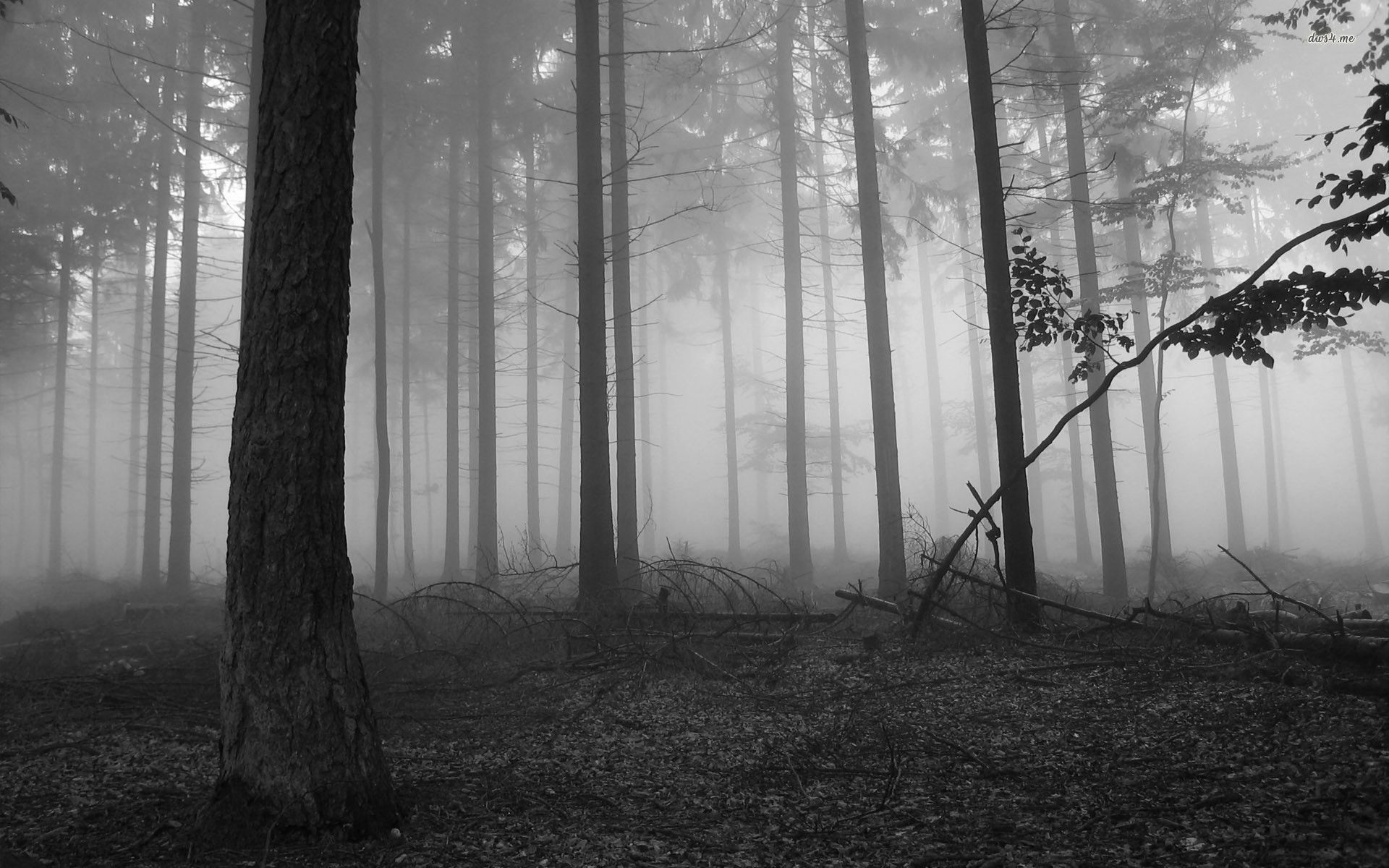 1920x1200 ... Dark Forest Wallpapers Iphone : Nature Wallpaper - Timmatic.com .