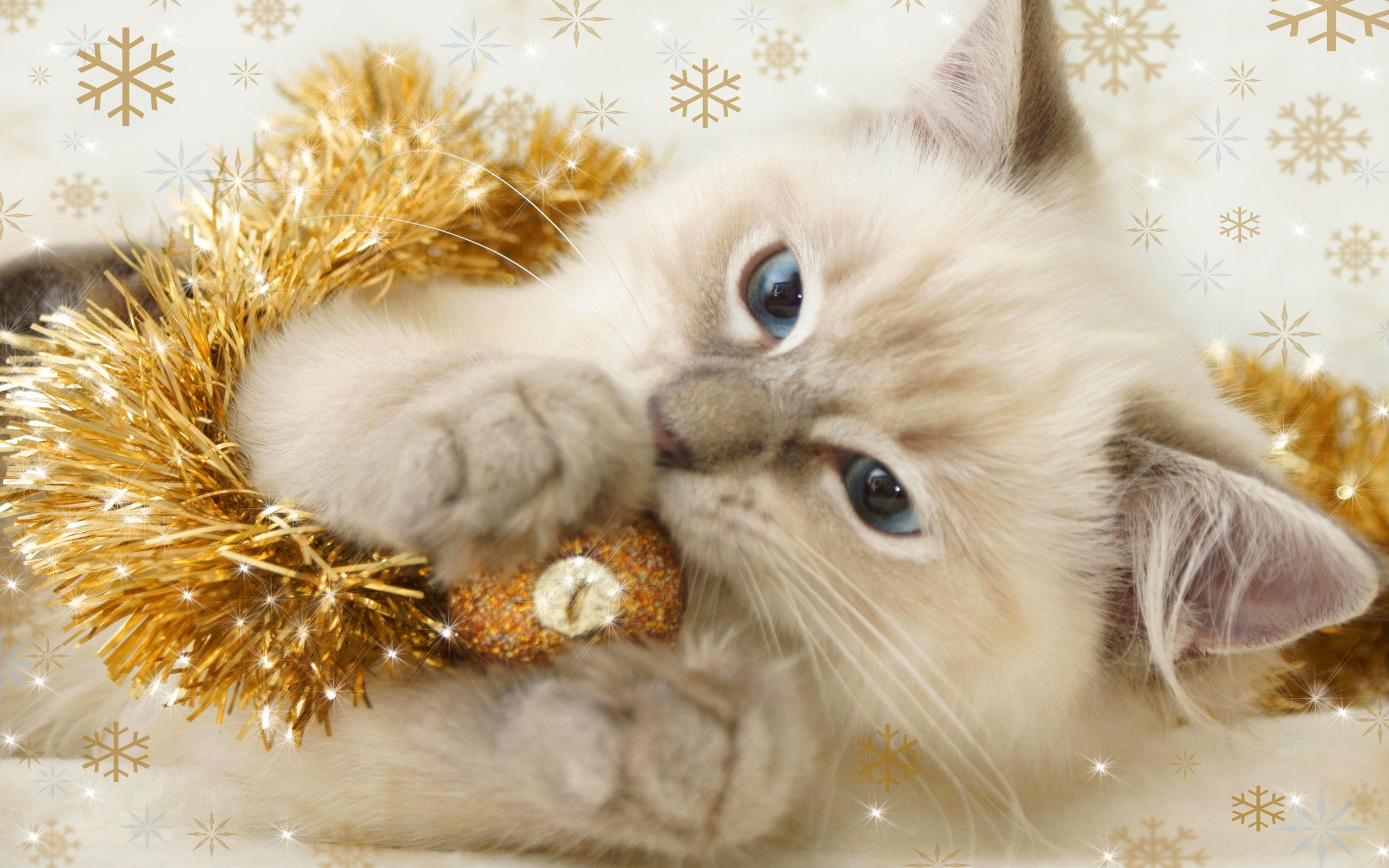 2560x1600 Christmas Kitten. - Cats Wallpaper (36711894) - Fanpop