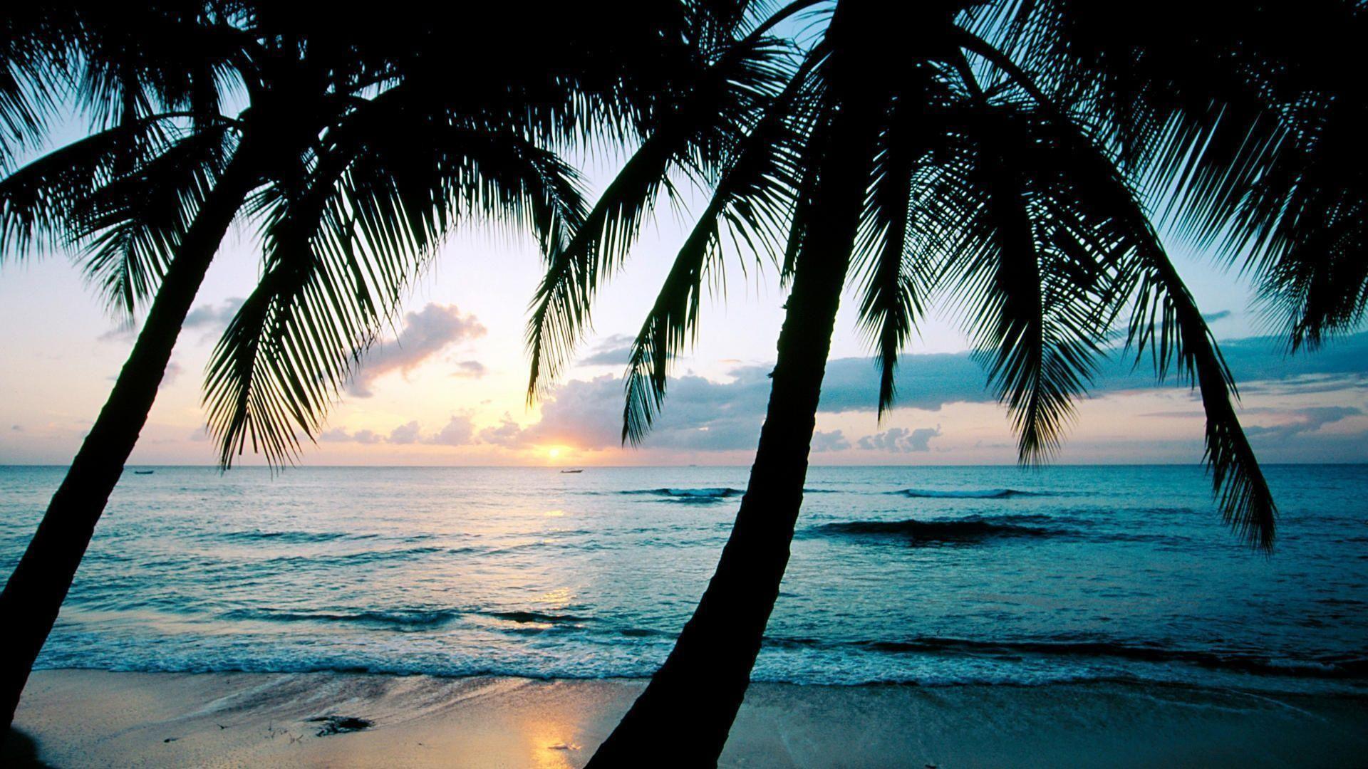 palm tree wallpaper desktop 69 images
