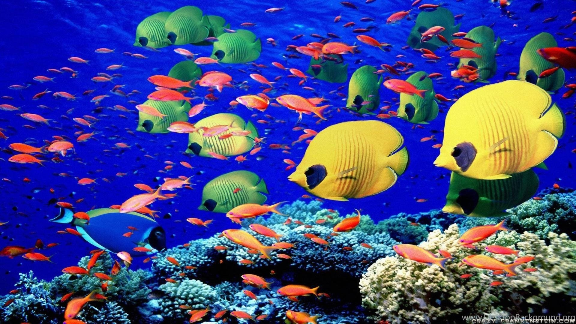 Fish Backgrounds 65 Images