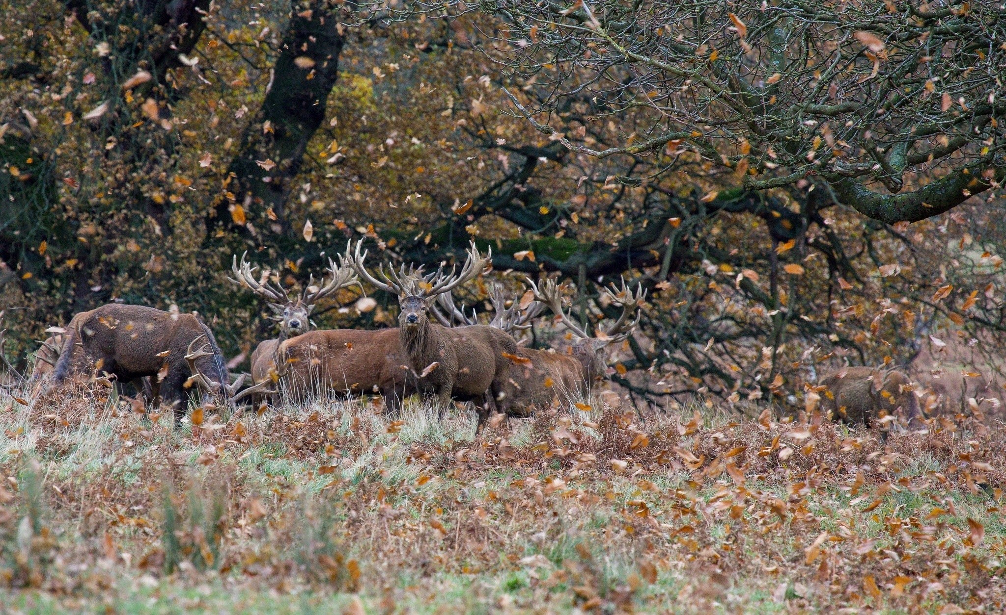 2048x1254 Animals Deer Forest
