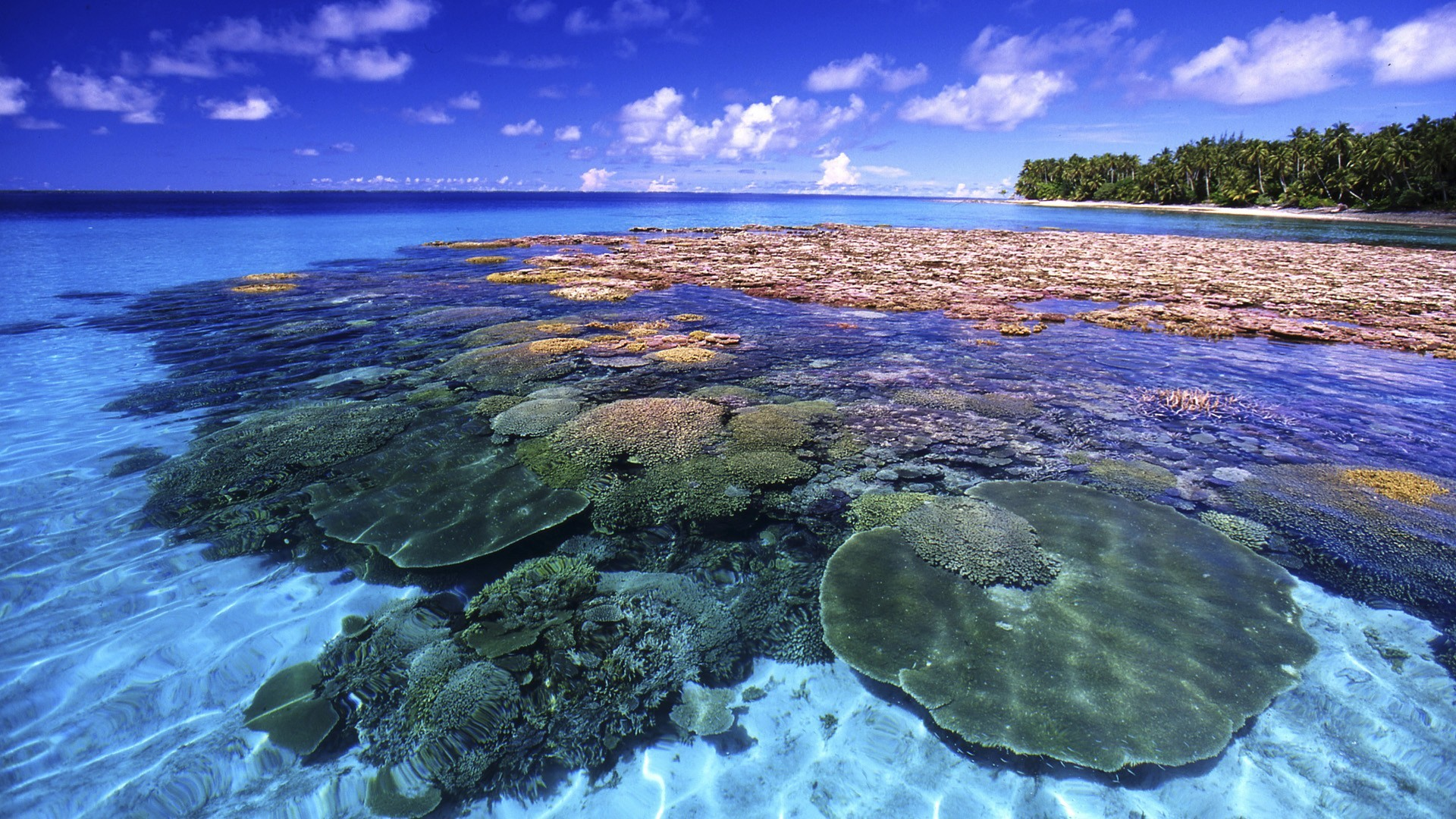 Great Barrier Reef Wallpaper (61+ Images