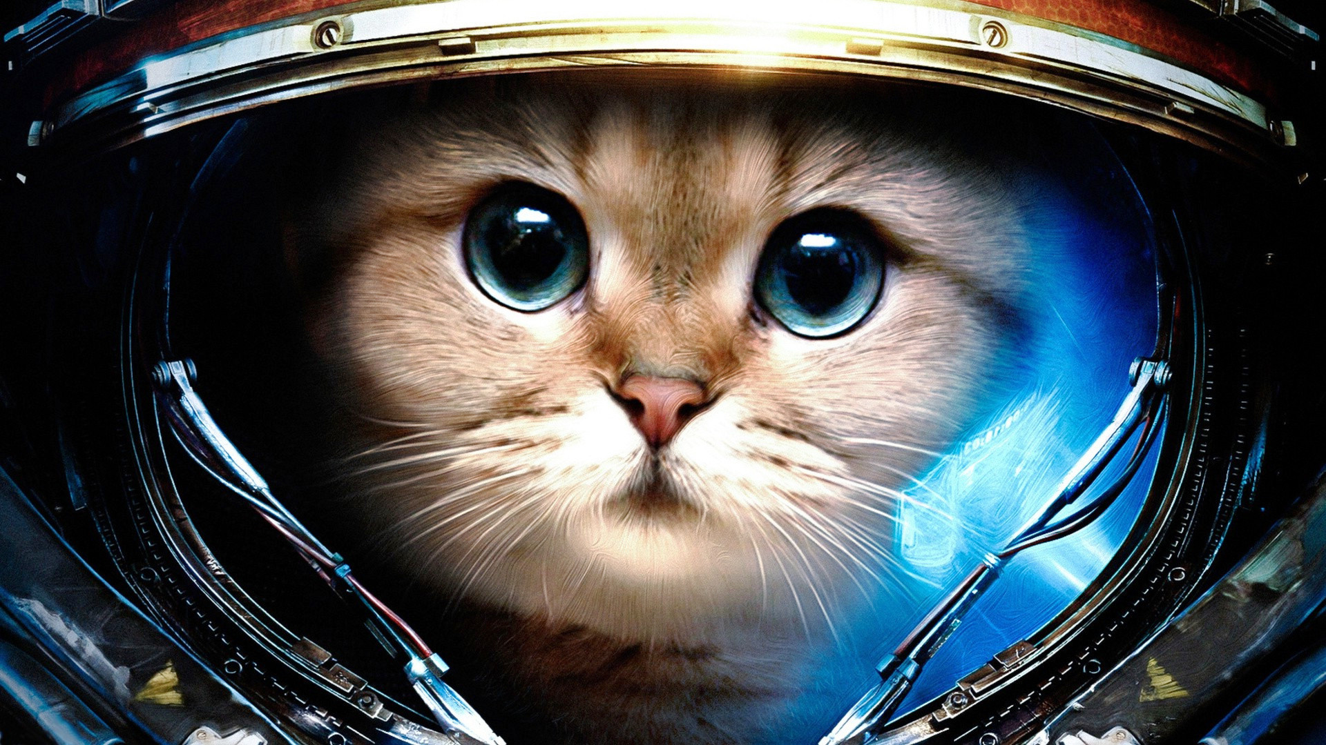 space cats hd wallpaper 78 images