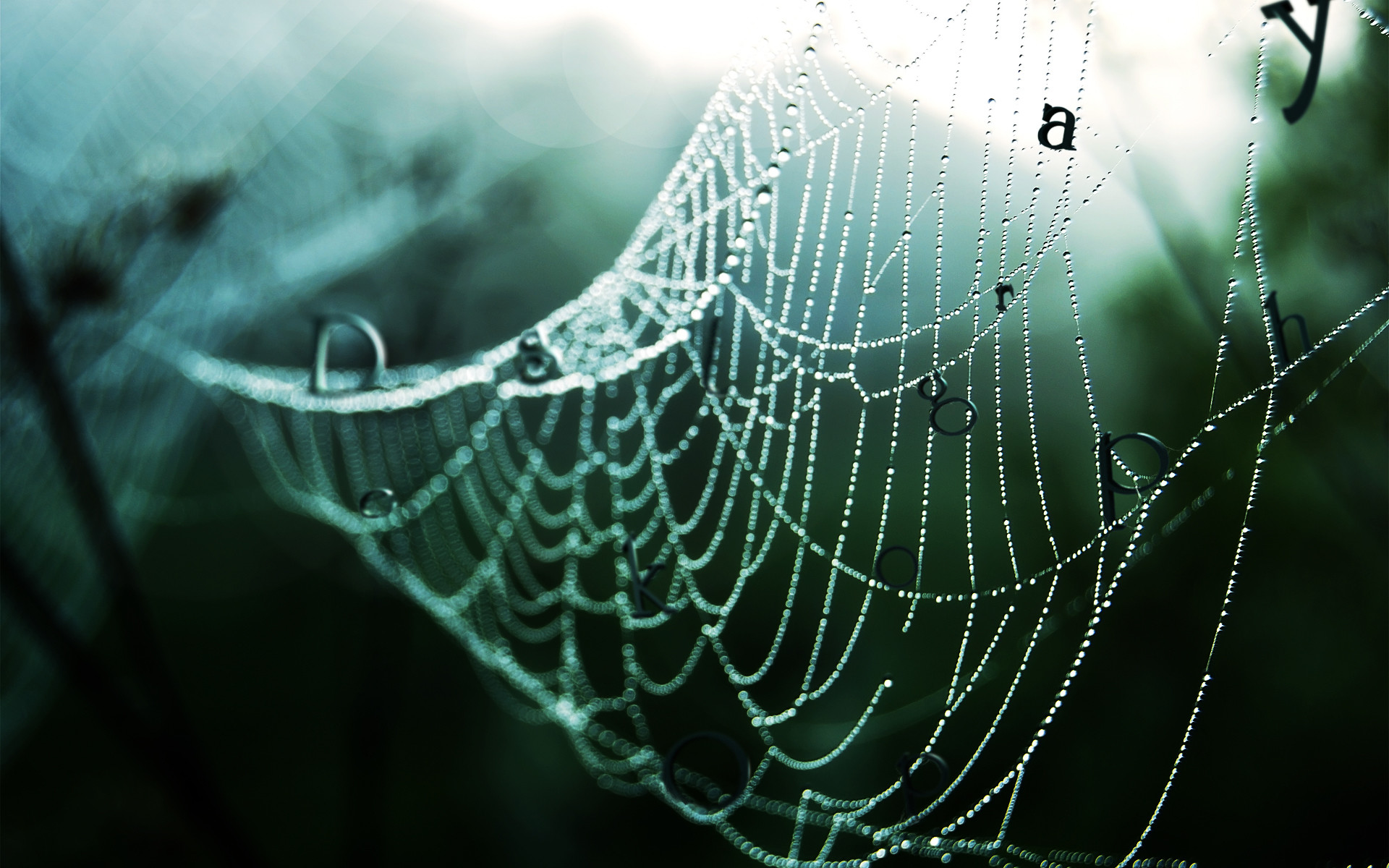 1920x1200 Wet spider web wallpapers and stock photos