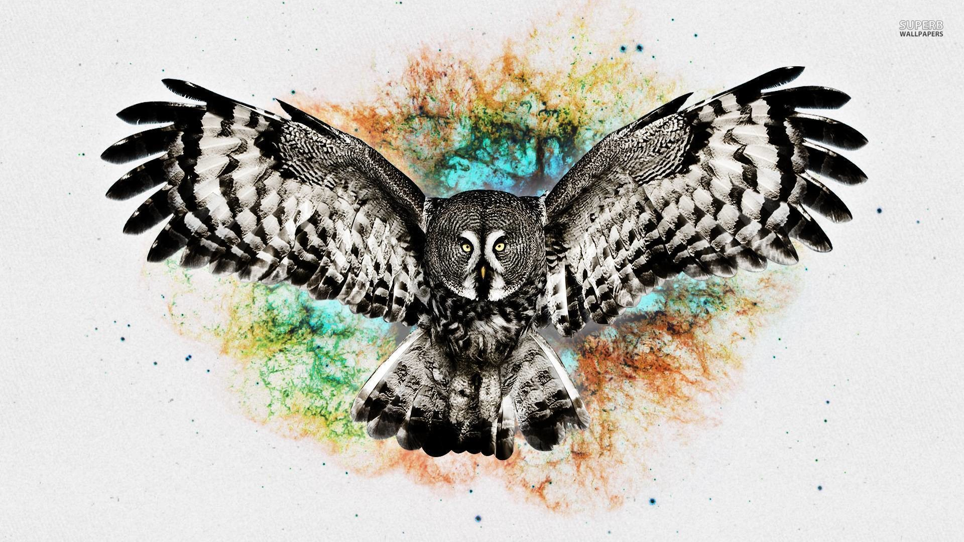 1920x1080 Owl wallpaper - Digital Art wallpapers - #