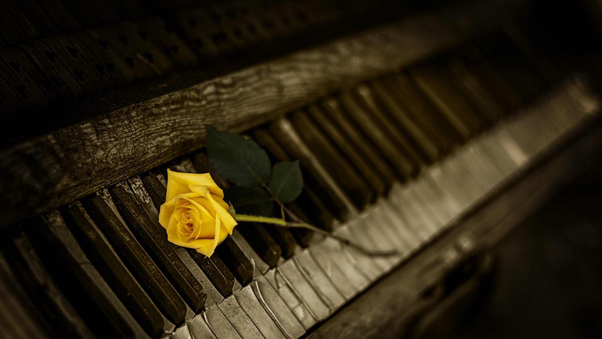 1920x1080 Preview wallpaper piano, rose, keys