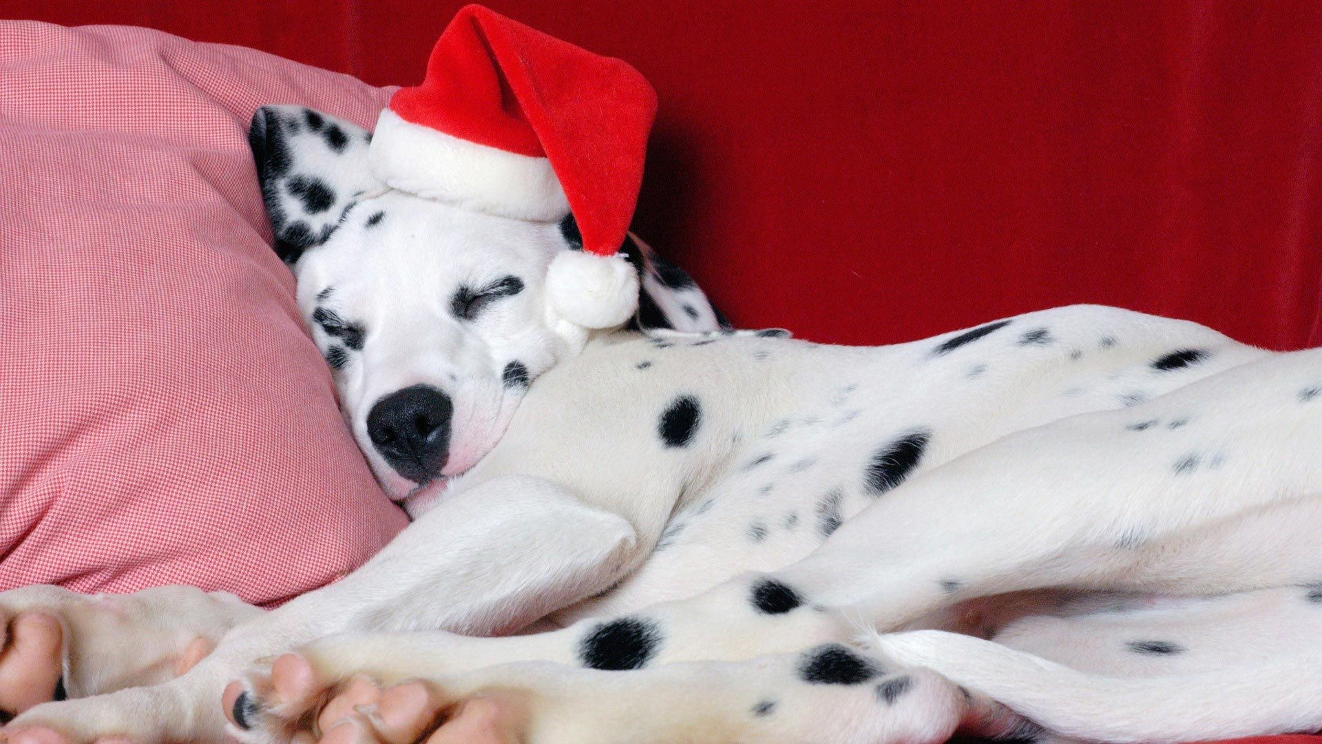 1920x1080 desktop images of christmas dogs