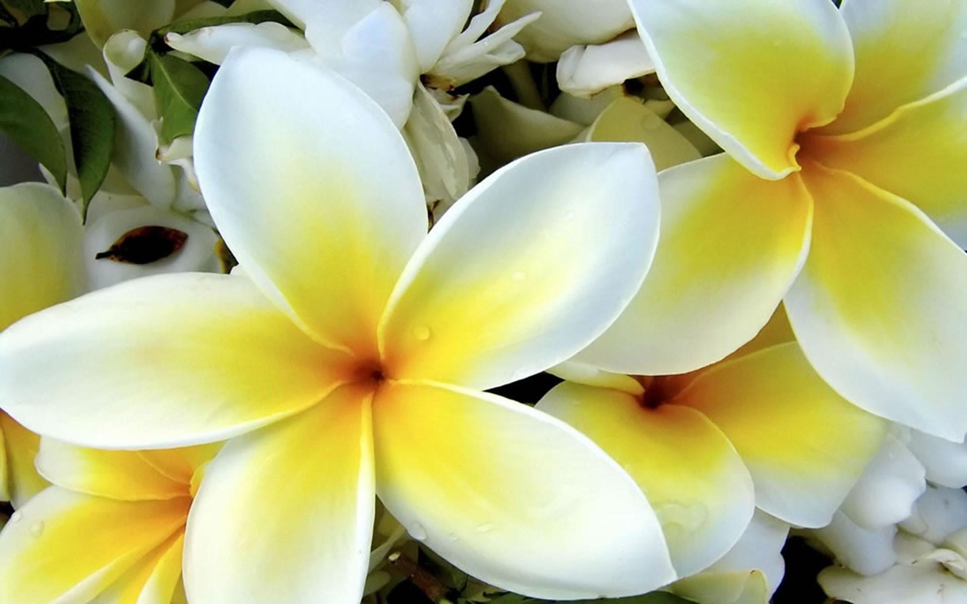 1920x1200 FUll HD 1080p Yellow Flowers Desktop Wallpapers