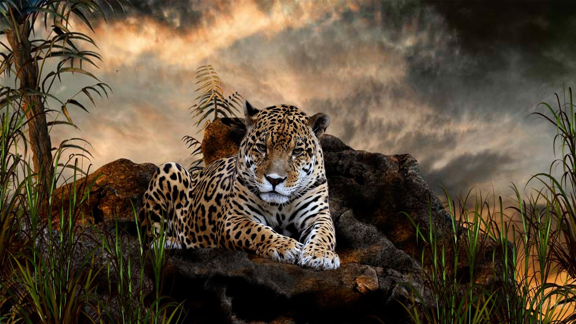 wildlife wallpapers and screensavers (69+ images)