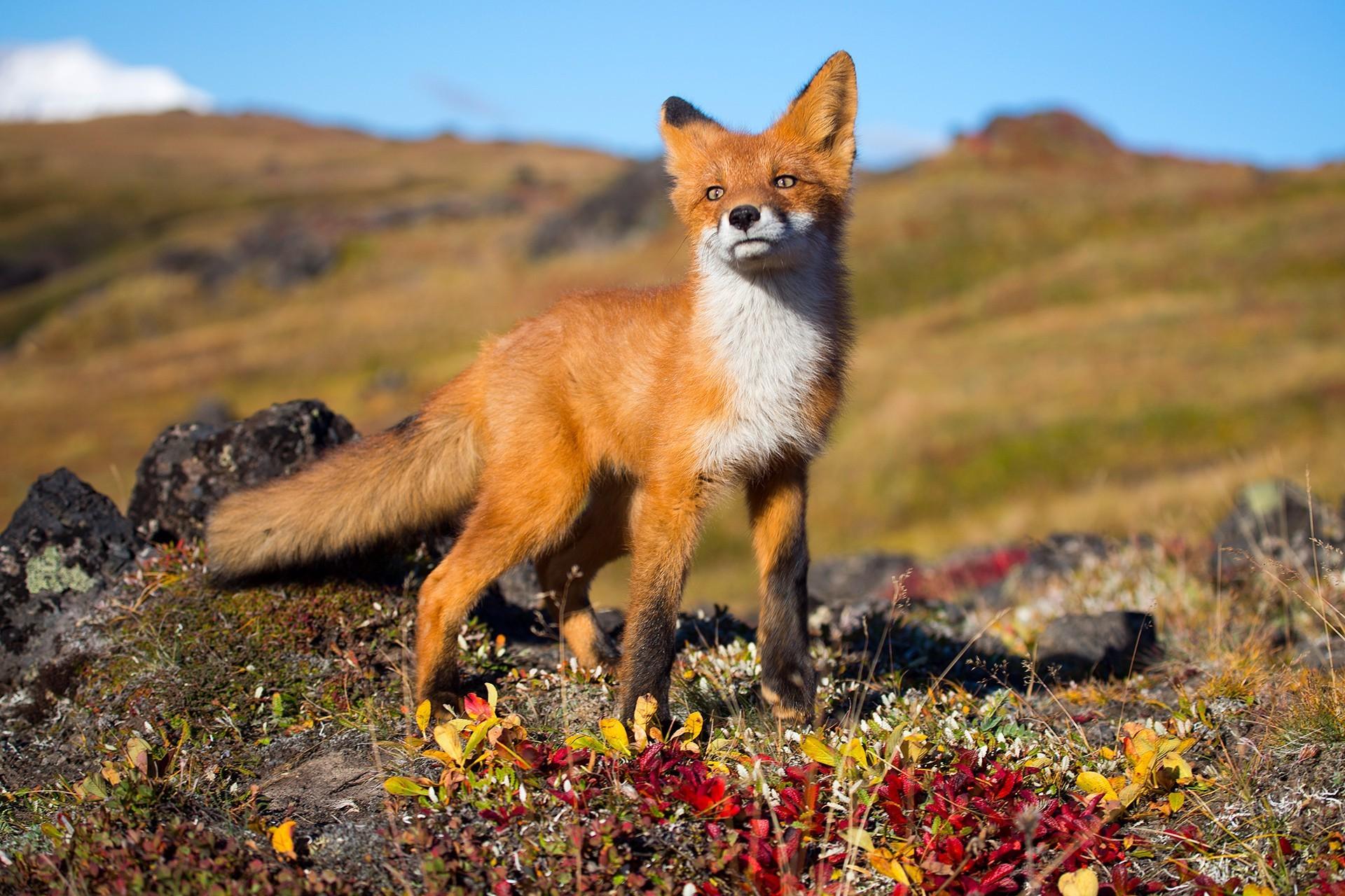 wildlife backgrounds for desktop (62+ images)