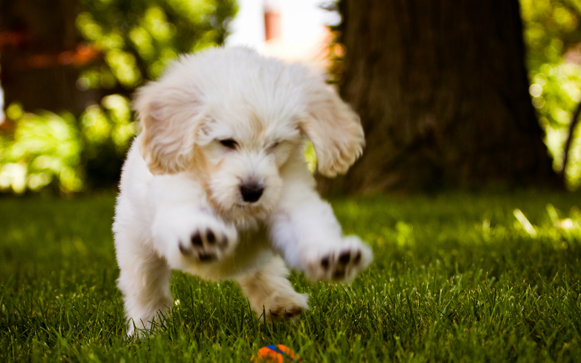 1920x1200 Most Beautiful Dog Puppy Wallpapers