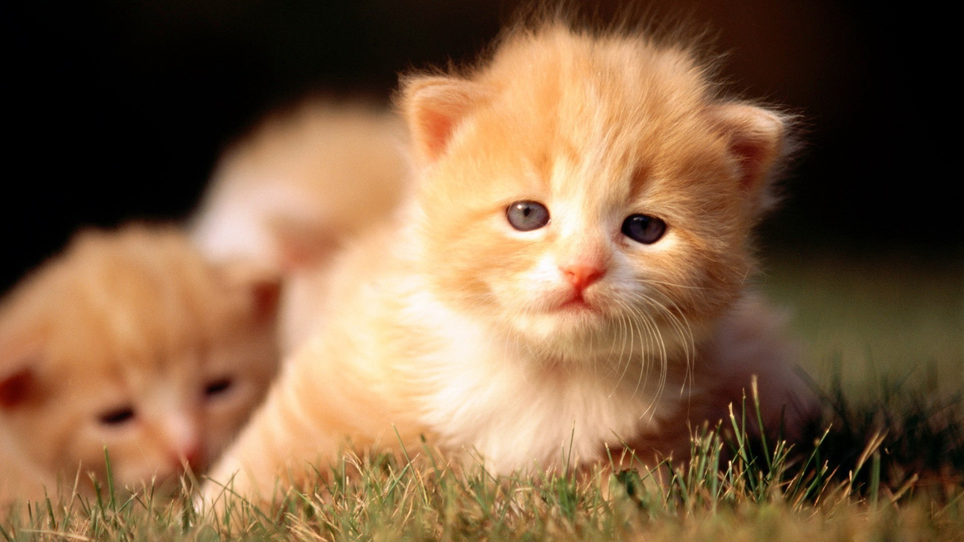 Baby kittens wallpaper 63 images 1920x1080 cute kitten wallpaper free download wallpapers hd pinterest wallpaper free download altavistaventures Choice Image
