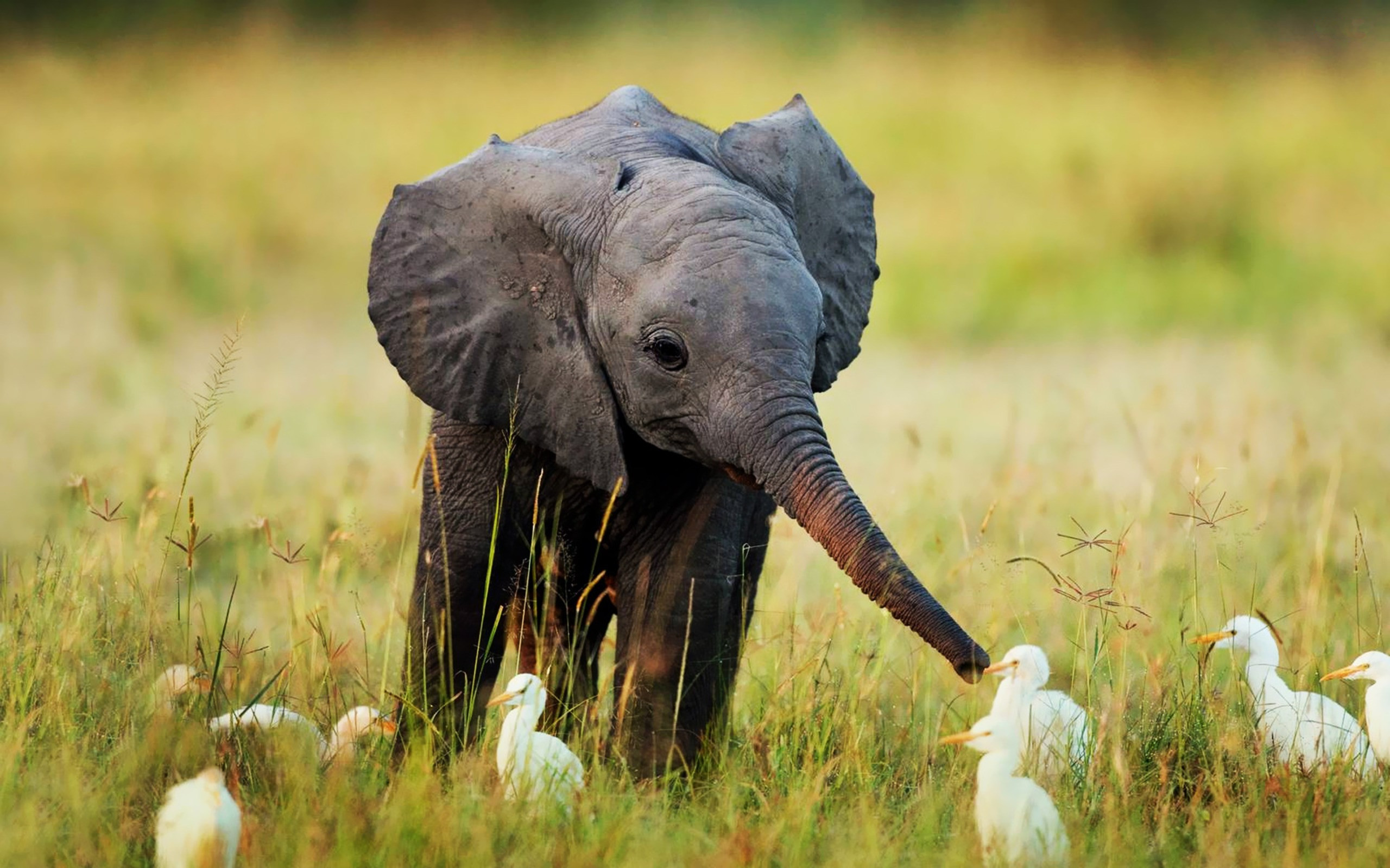 baby animal wallpaper pictures (59+ images)