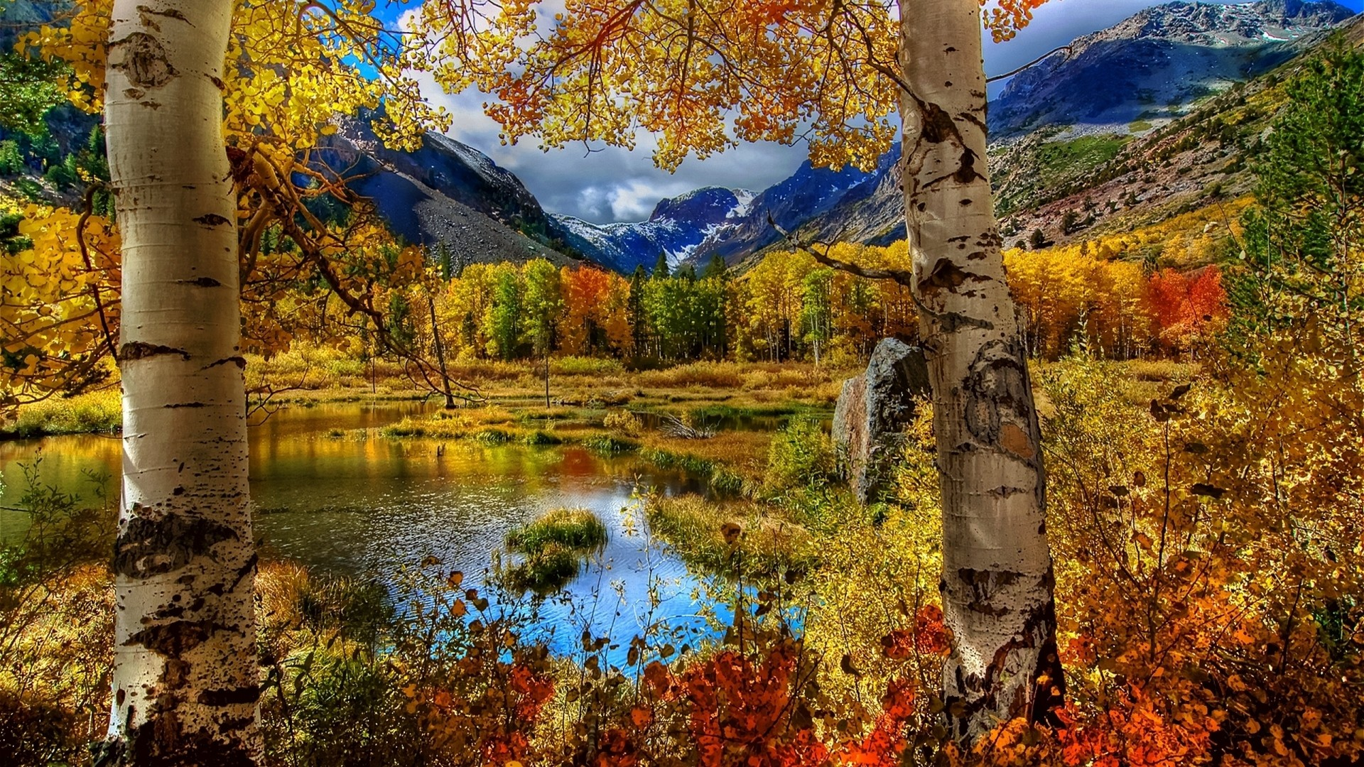 1920x1080 Preview wallpaper autumn, birch, color, paint, plants, pond, mountain,