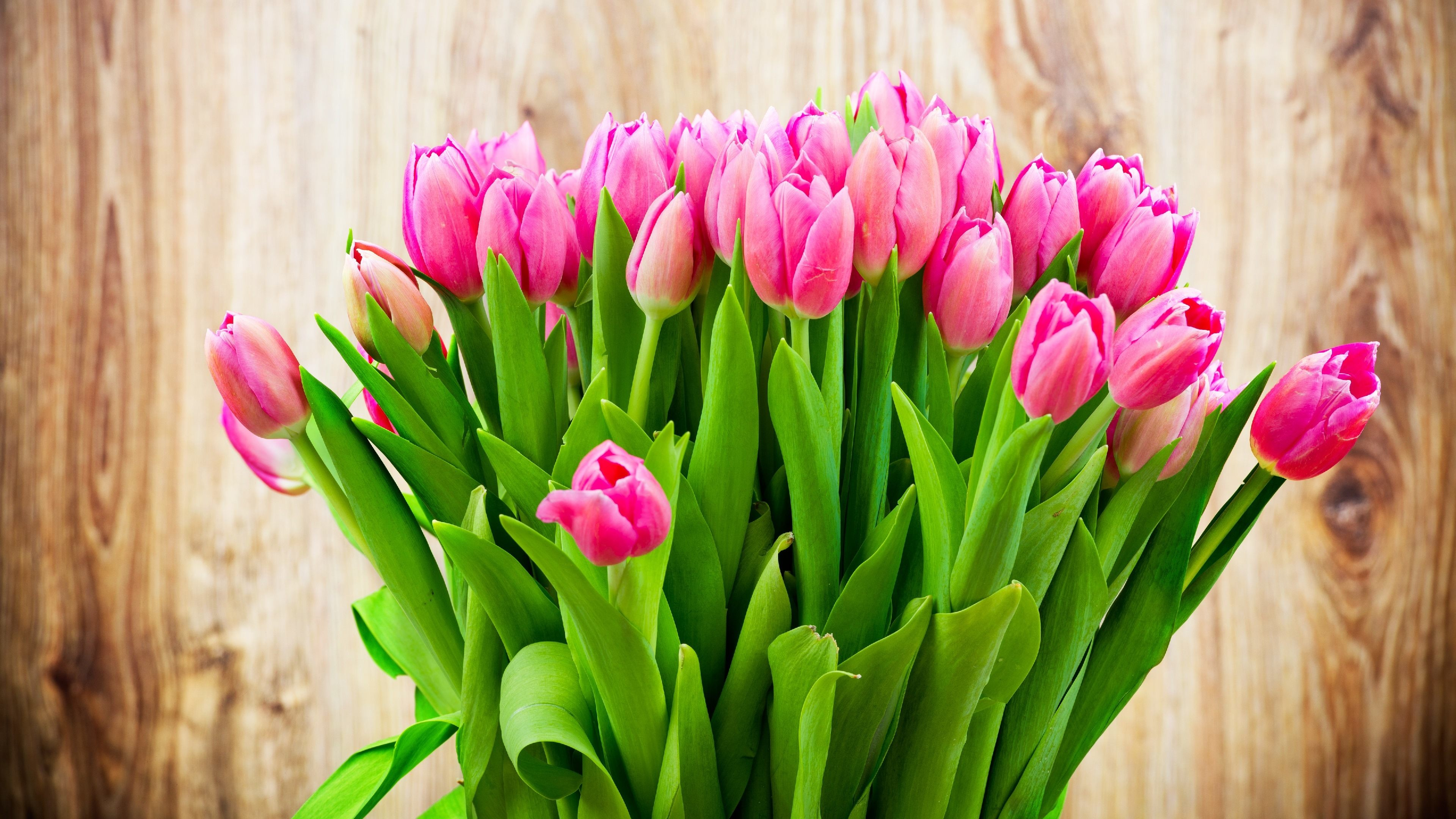 3840x2160 Tulips HD Backgrounds for PC