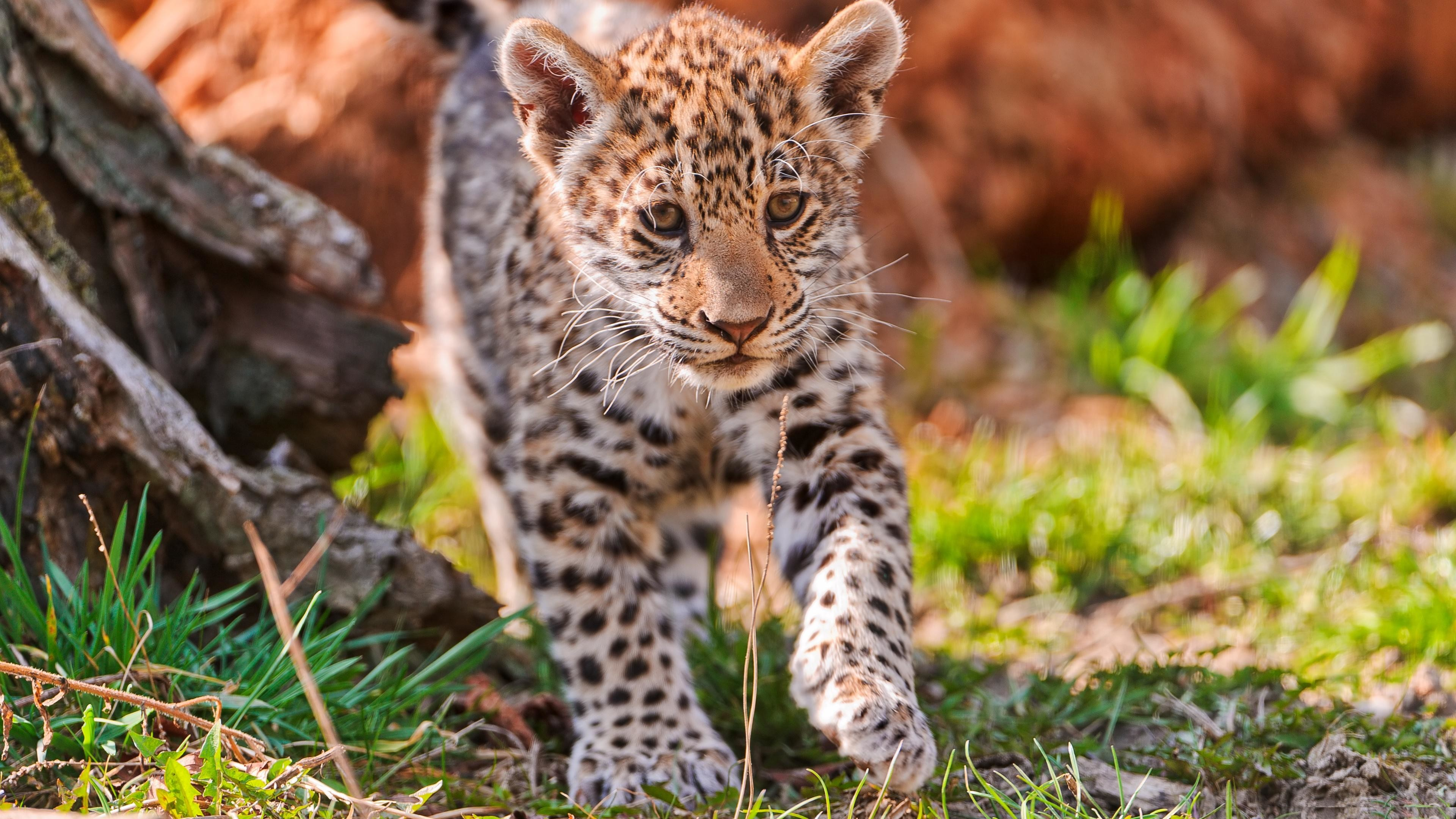 cute animals wallpapers (62+ images)