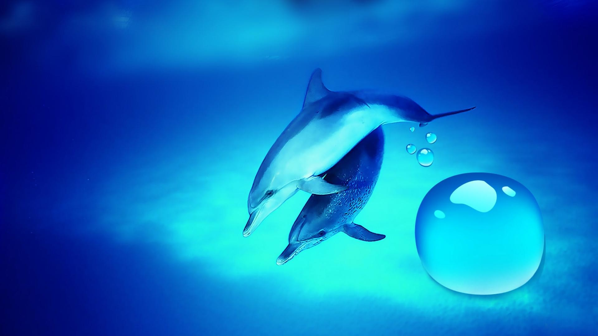 1920x1080 Free Dolphin Wallpapers For Desktop Wallpaper Dolphin Pictures Wallpapers  Wallpapers)