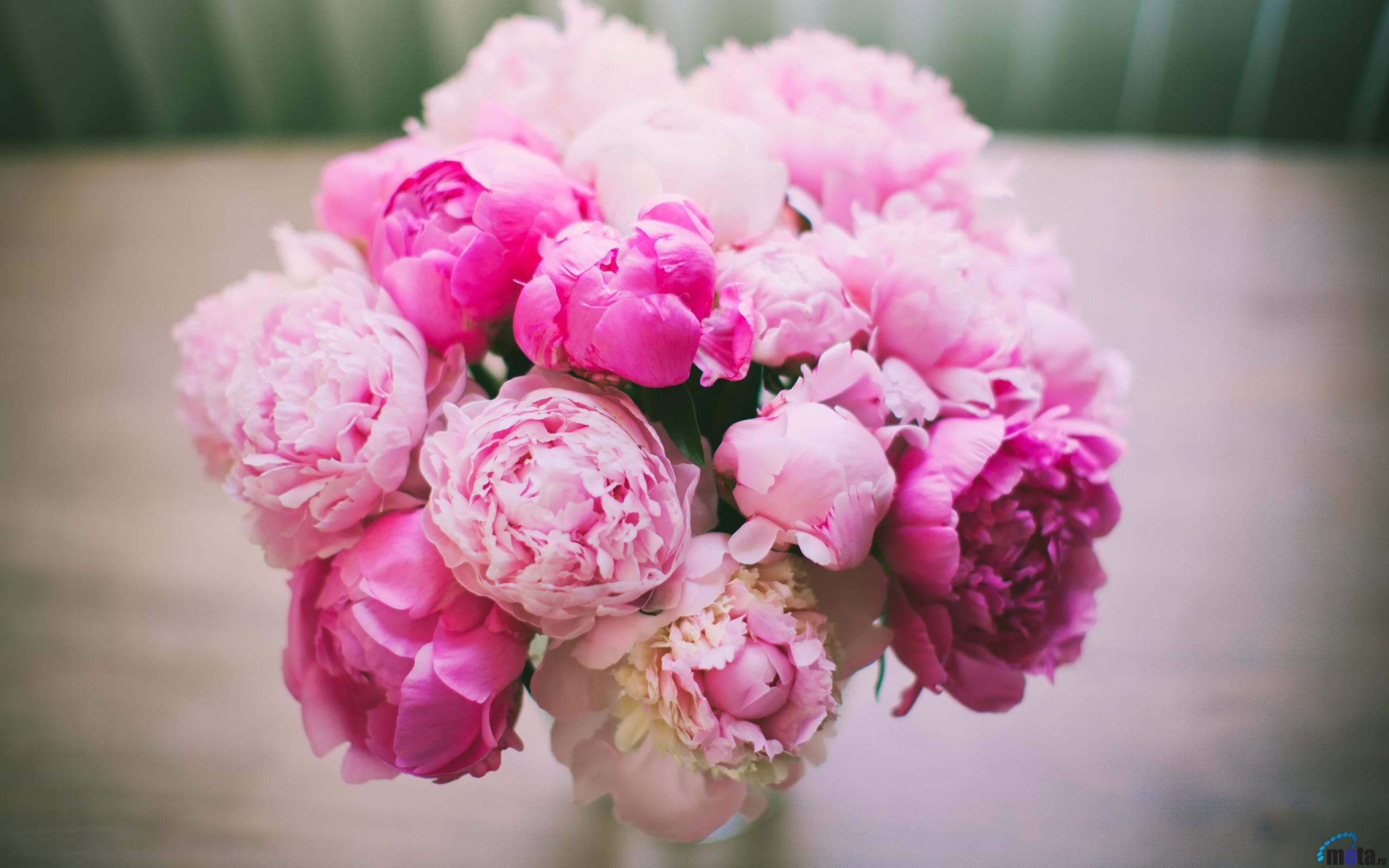 2560x1600 Download Wallpaper Pink peonies in a vase (2560 x 1600 .