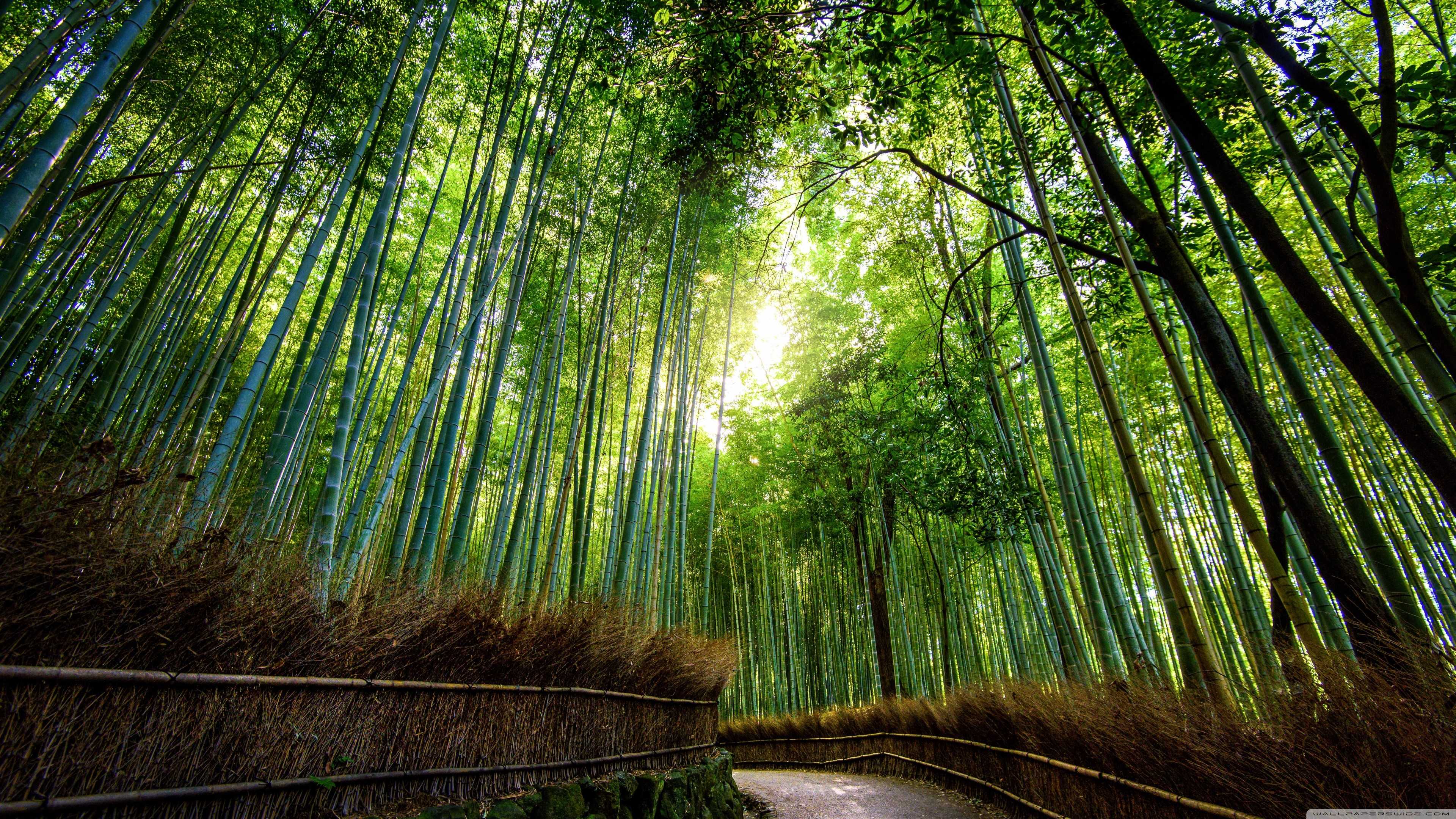 3840x2160 4K Ultra HD Jungle Wallpapers HD, Desktop Backgrounds  ... Bamboo  ...