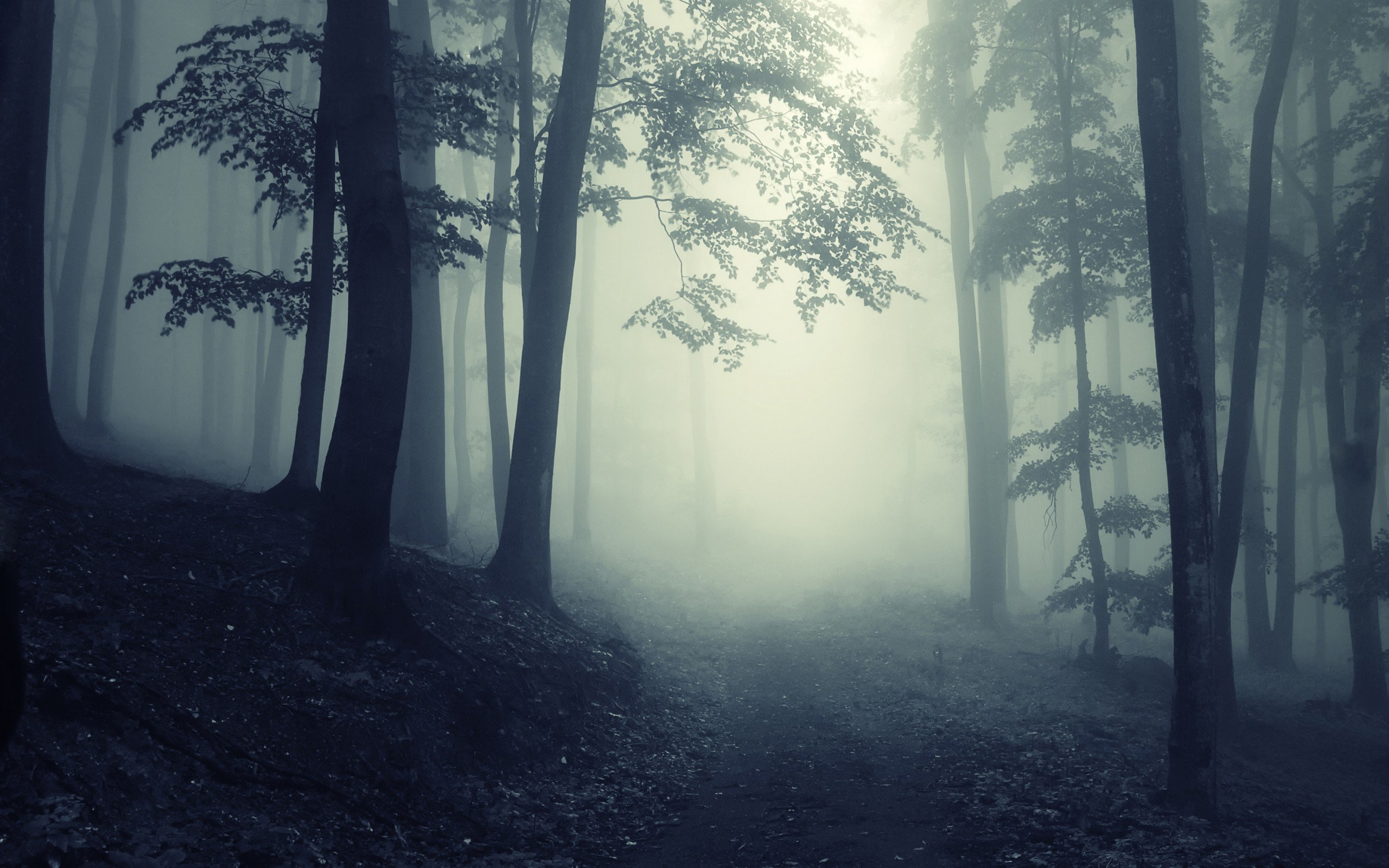 2560x1600 Dark Forest | Path Through A Dark Forest |