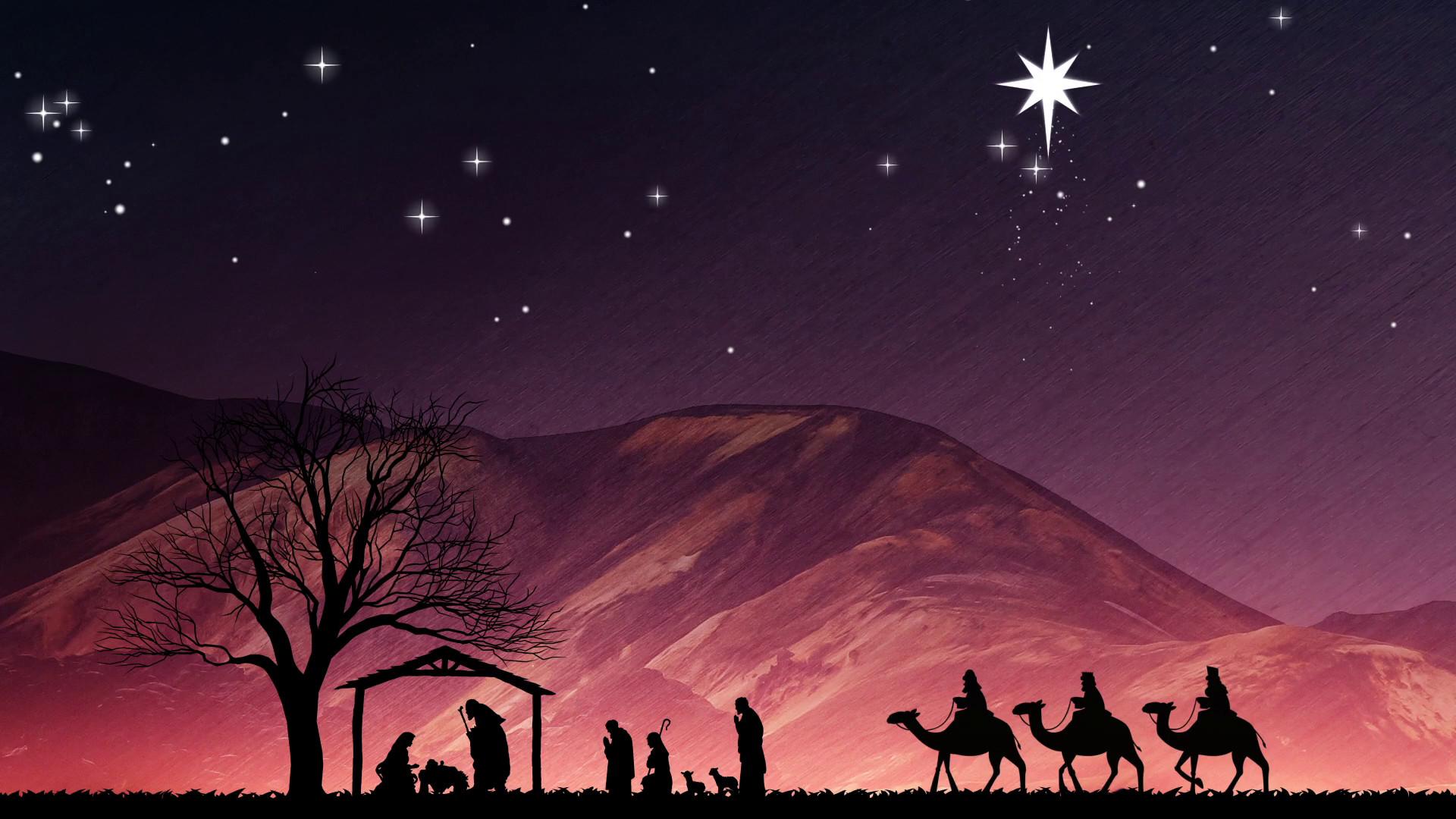 Christmas Tree Night