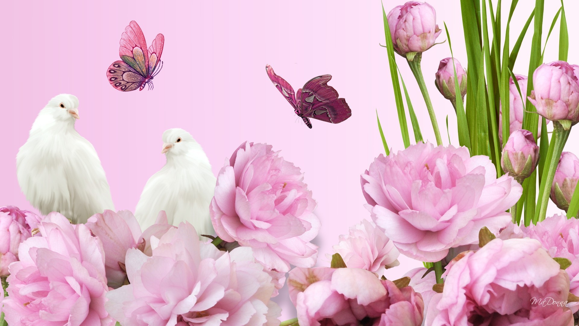 1920x1080 Pink Tag - Peaceful Flowers Doves Bright Spring Peonies Pink Lush Summer  Pigeon Fragrant Graceful Aroma