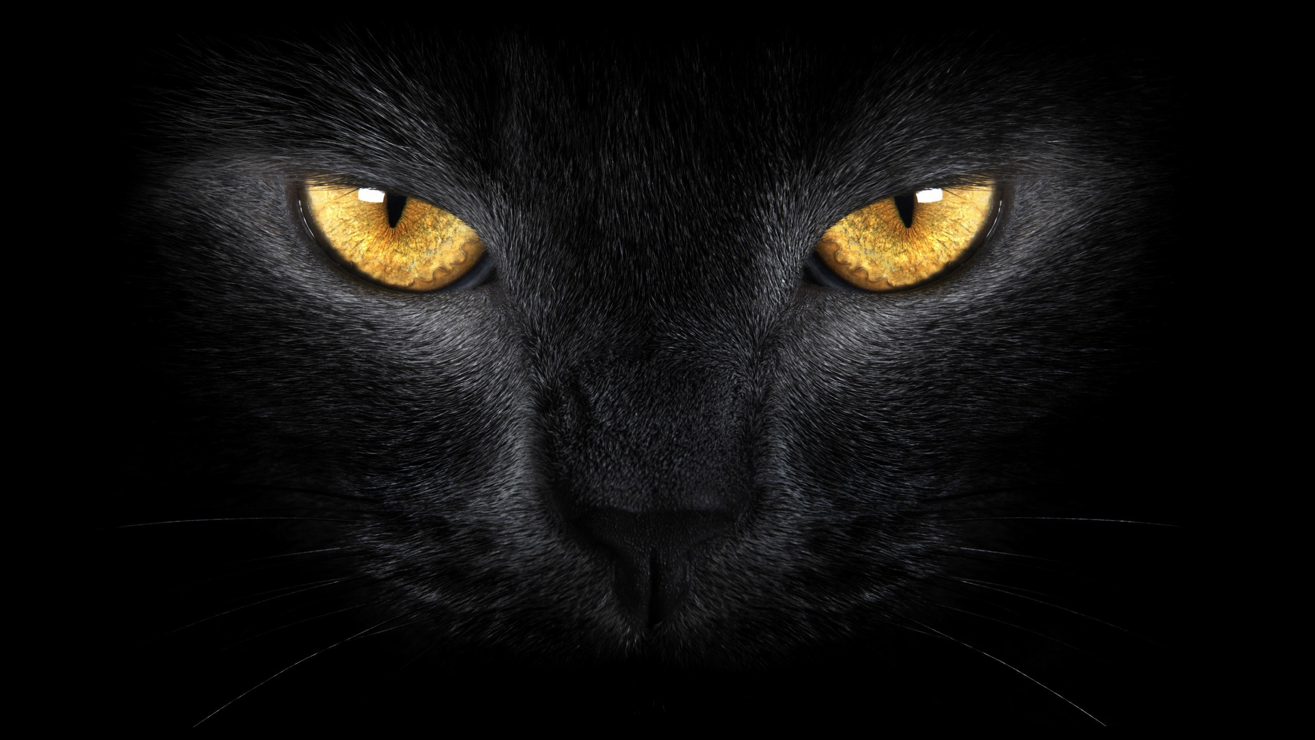 Chat Noir Wallpapers 69 Images