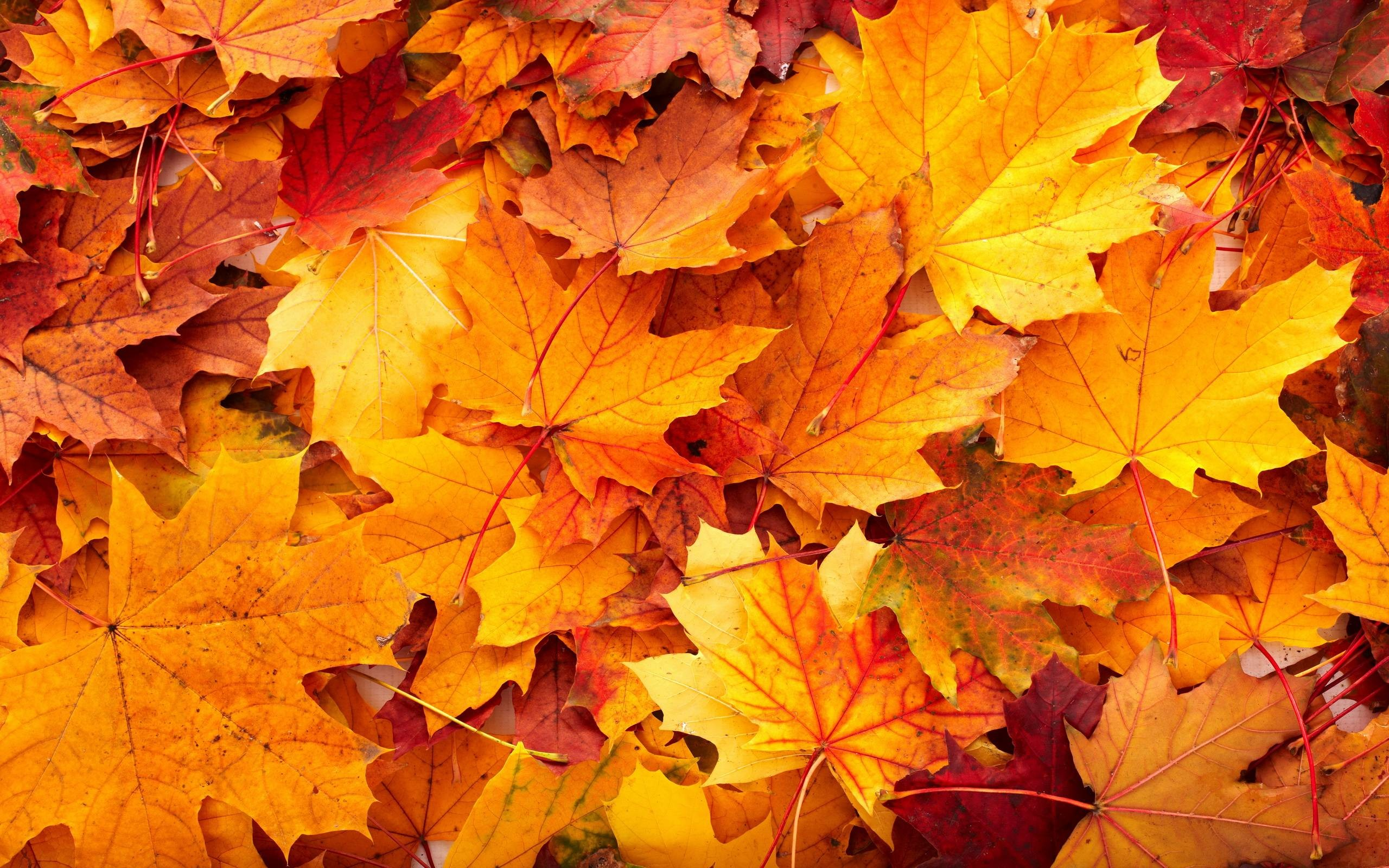 2560x1600 Fall Leaves Nature High Resolution Wallpaper Desktop Backgrounds Free