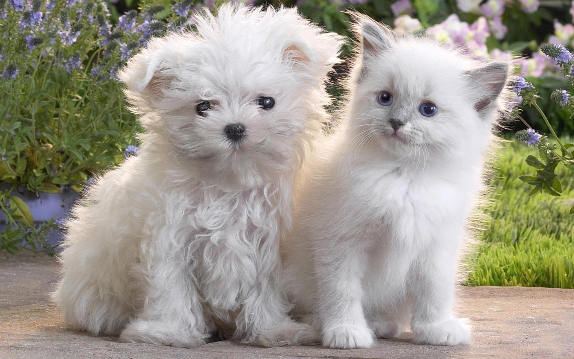 1920x1200 cute dog cat kitten puppy dog cat puppy kitten fluffy