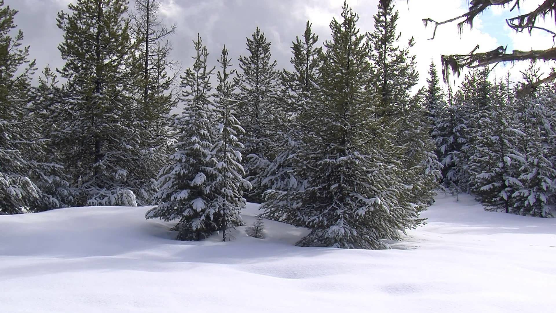 1920x1080 Winter Wonderland for Your Home: Snowy Scenery for Your Television - Trailer