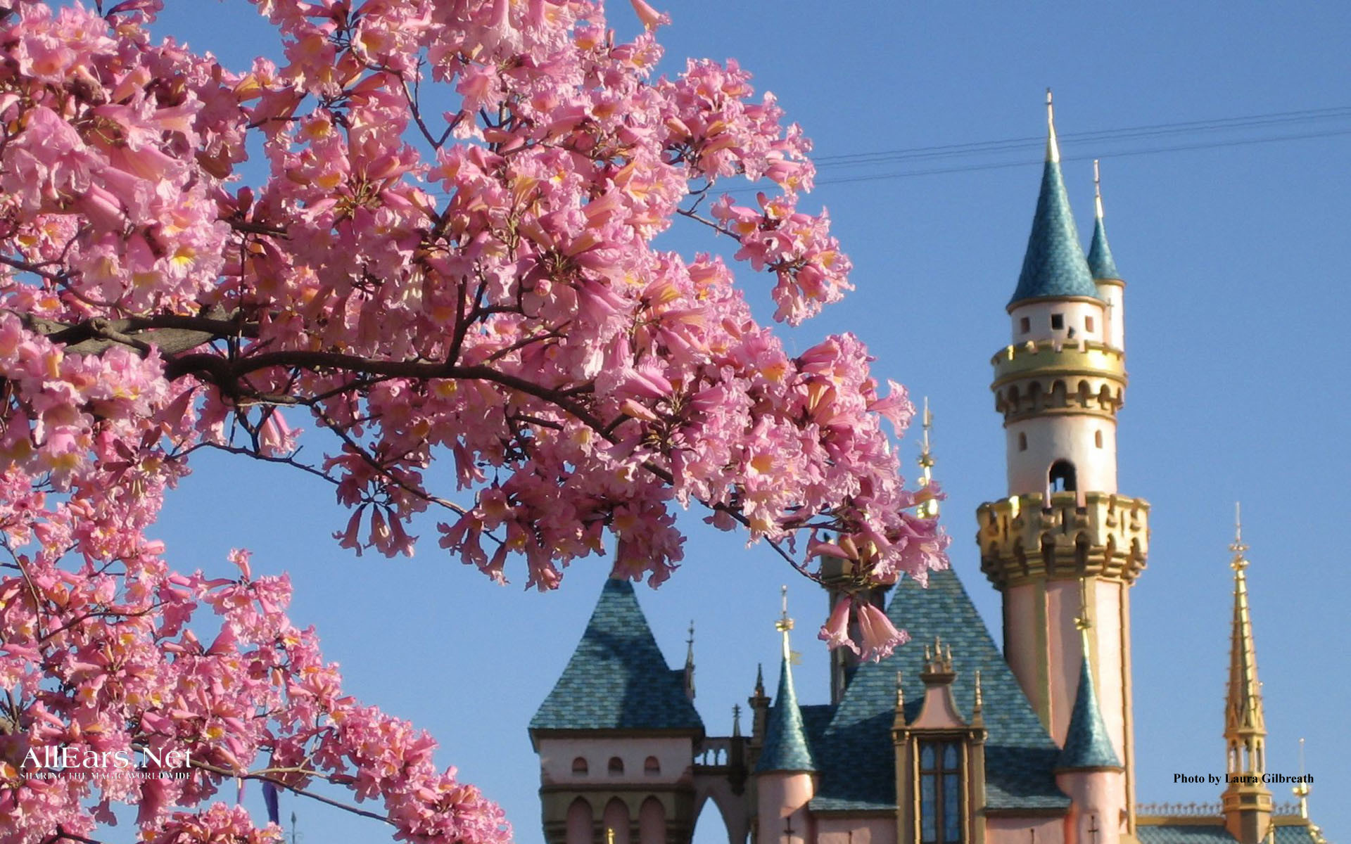 1920x1200 Disney Spring Wallpaper 21700 - Baltana ...