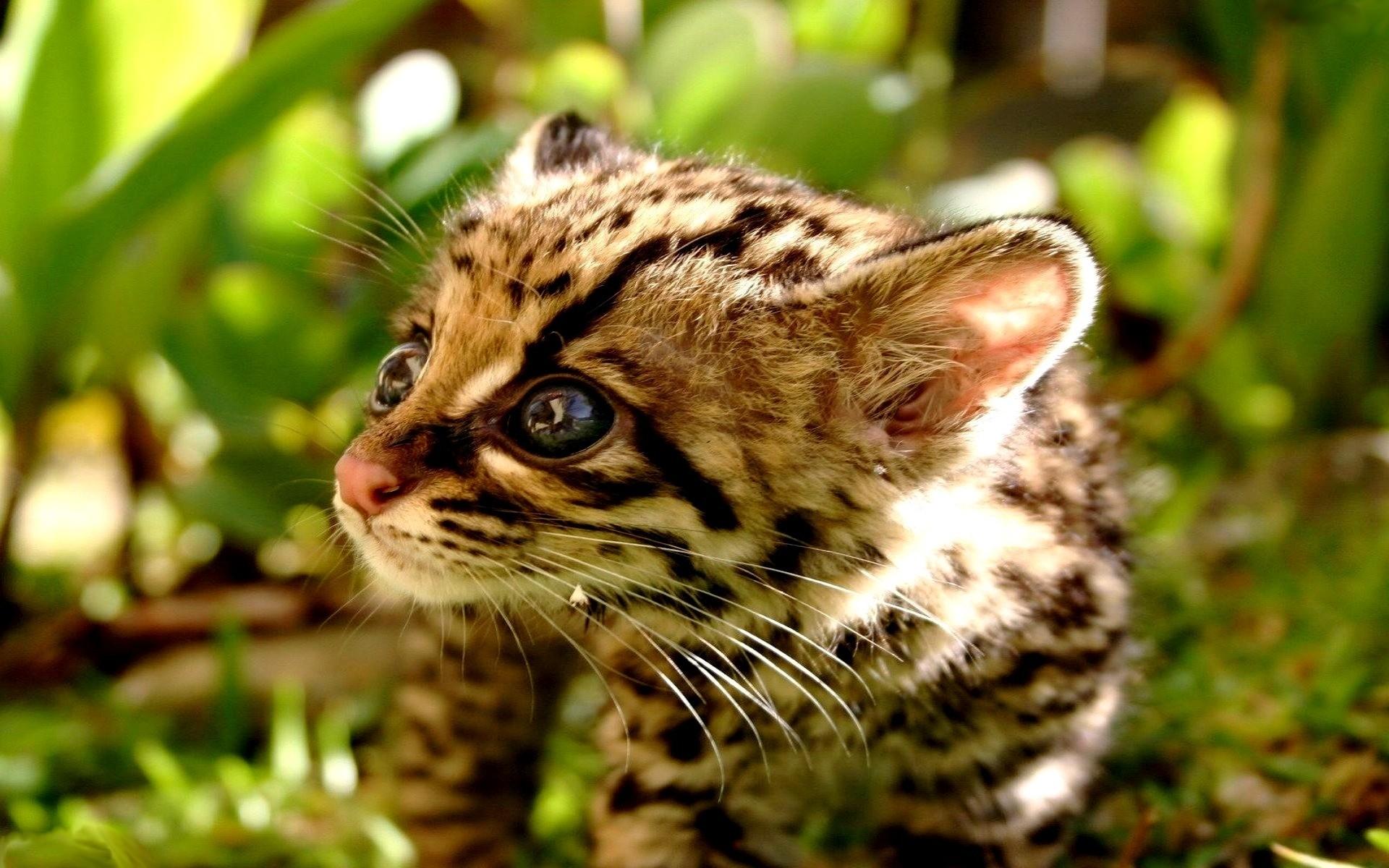 cute cheetah wallpaper (58+ images)